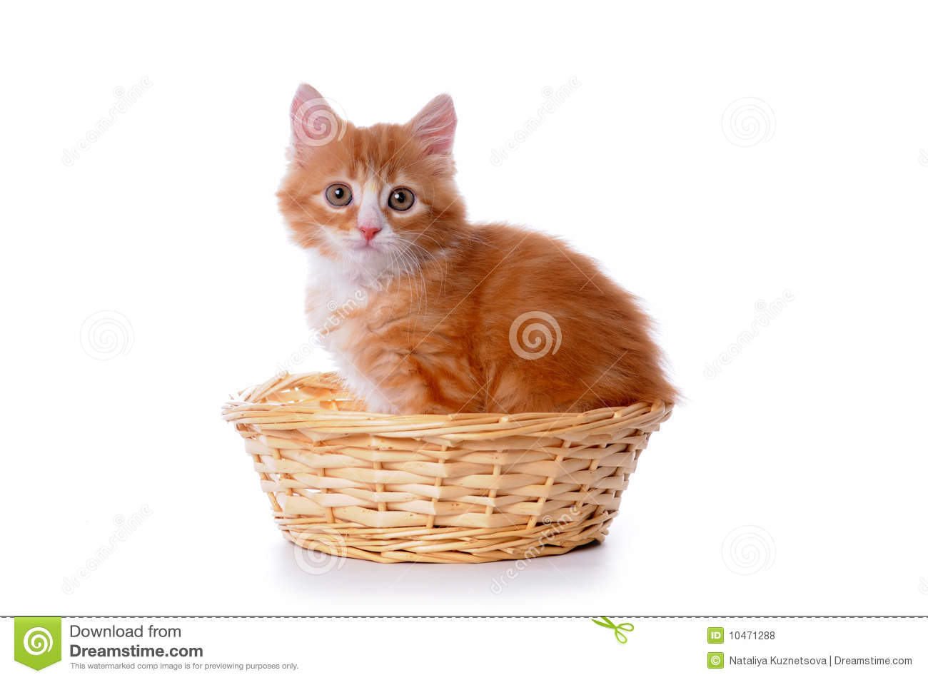 Cute Small Kitten In A Basket Royalty Free Stock Photos ...