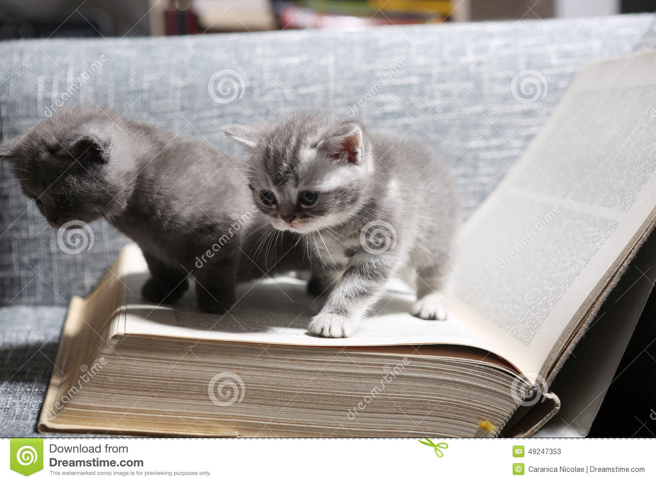 Cute Small Kittens Stock Image