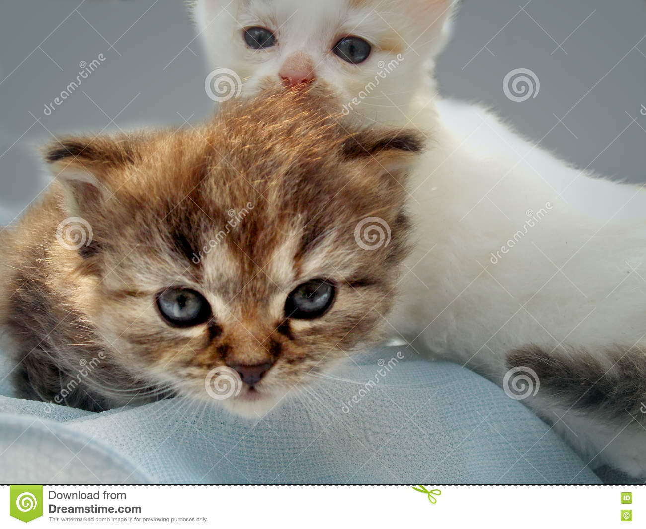 Cute small kittens stock photo Image of look cute light