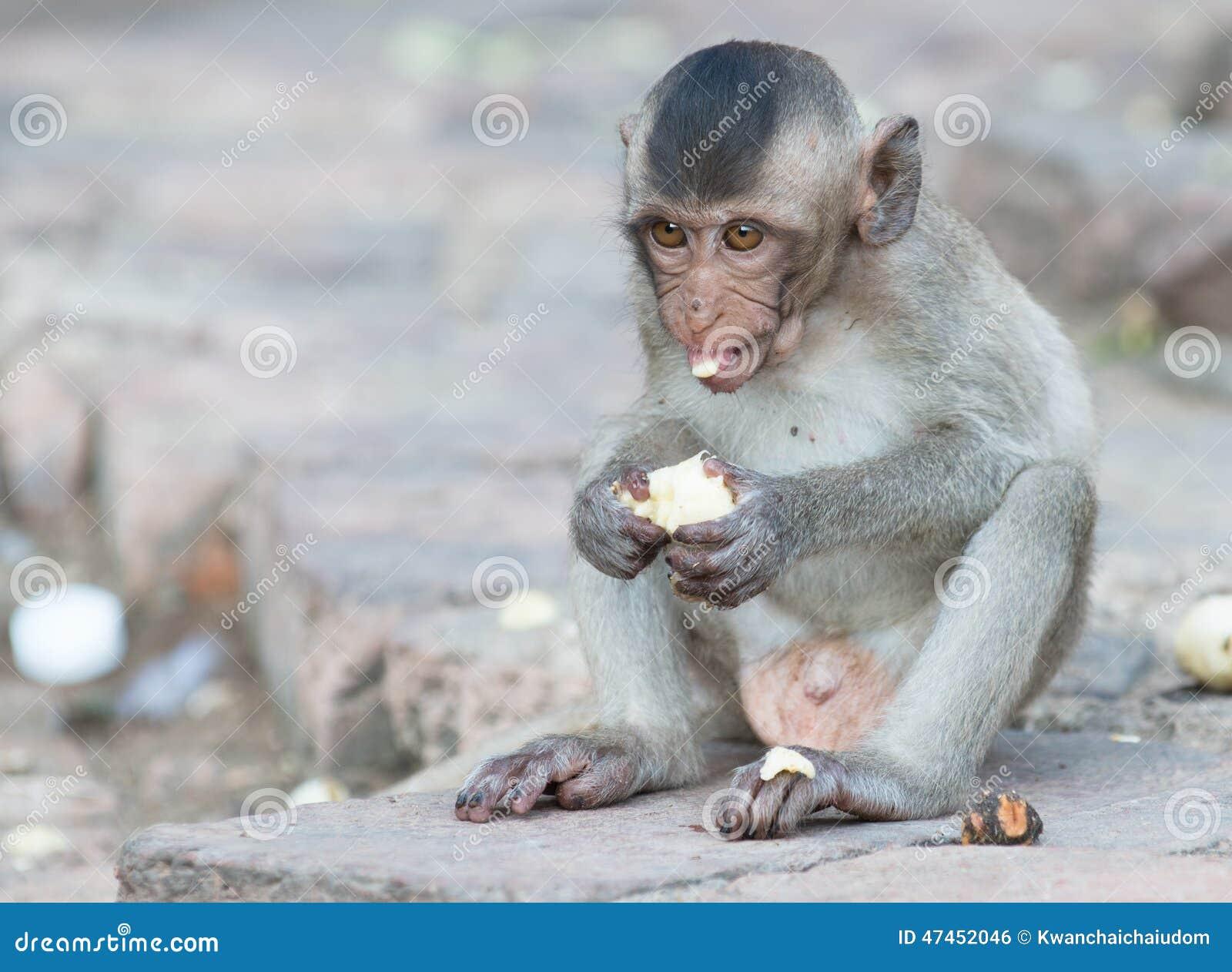 Finding prosperity by feeding monkeys analysis