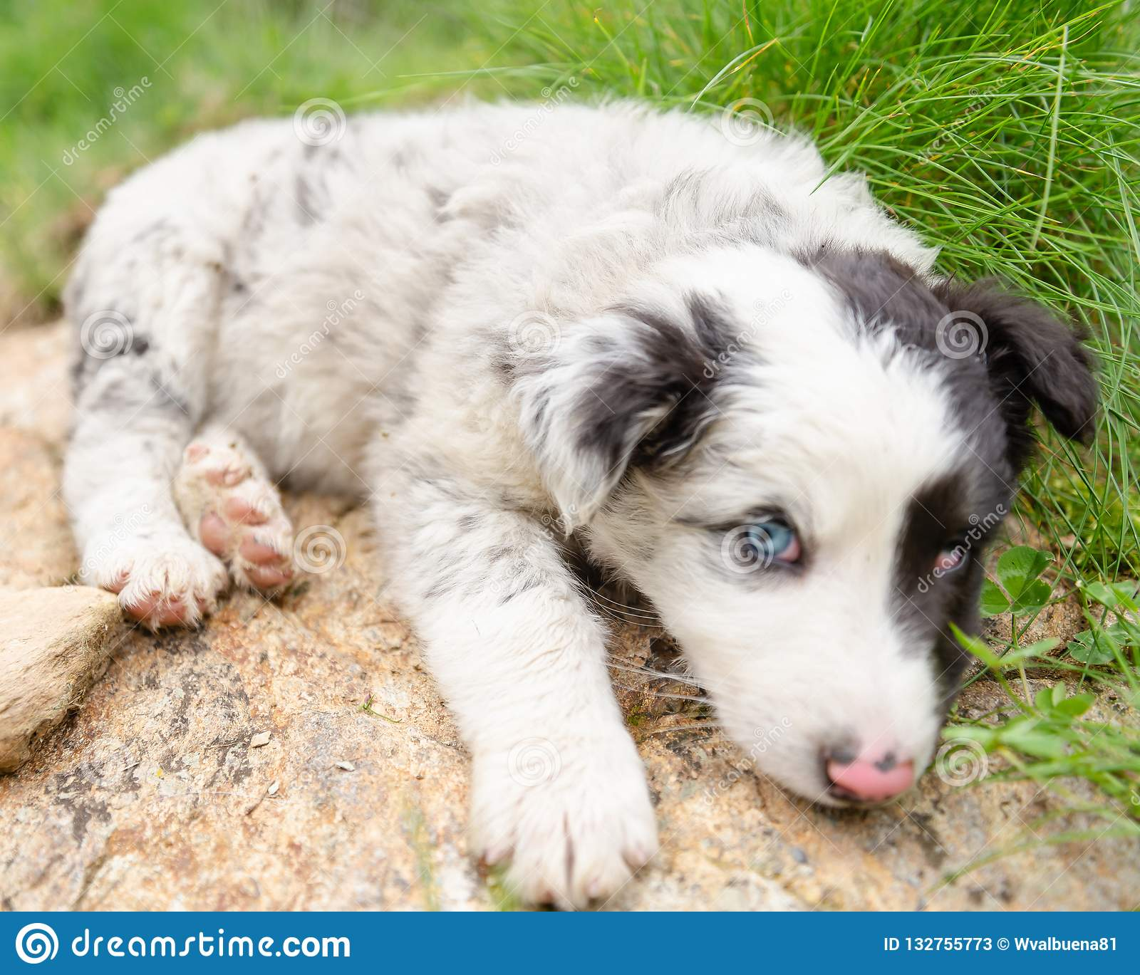 Cute and small puppy dog lying on a rocks