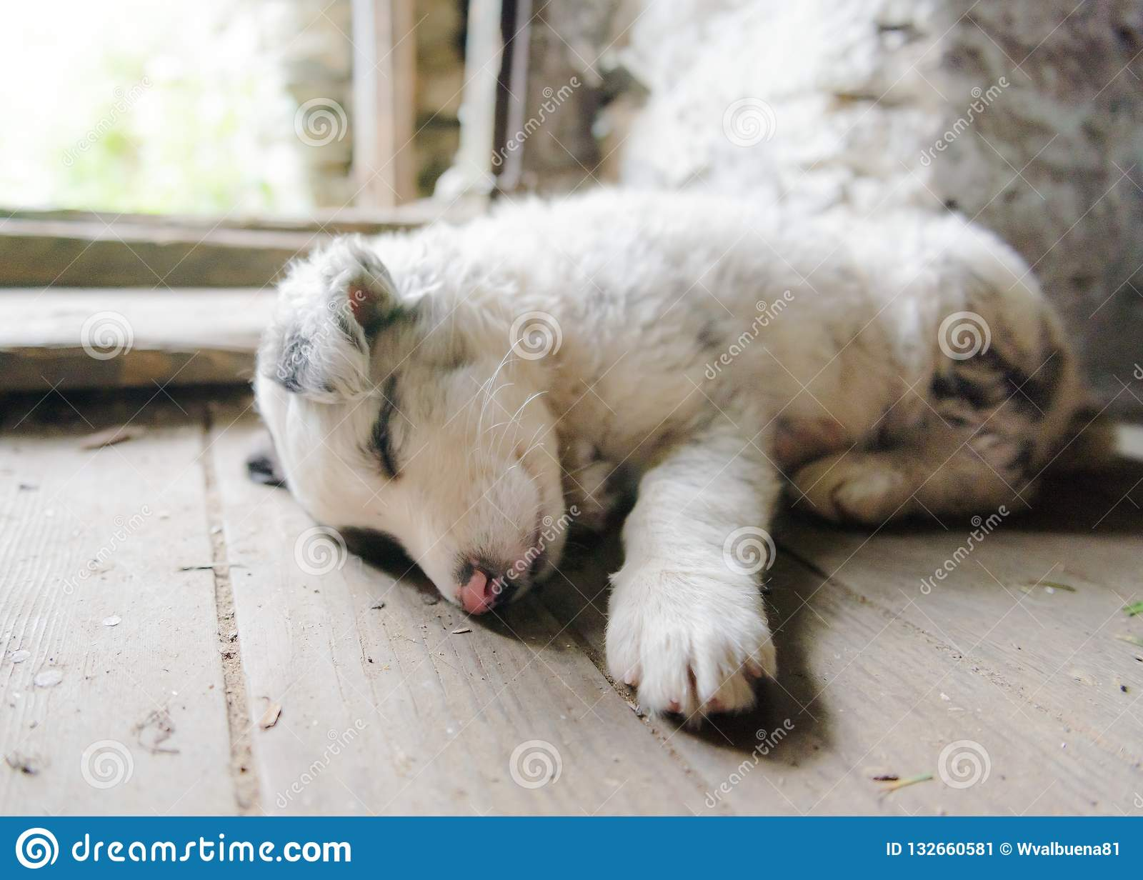 Cute and small puppy dog sleeping