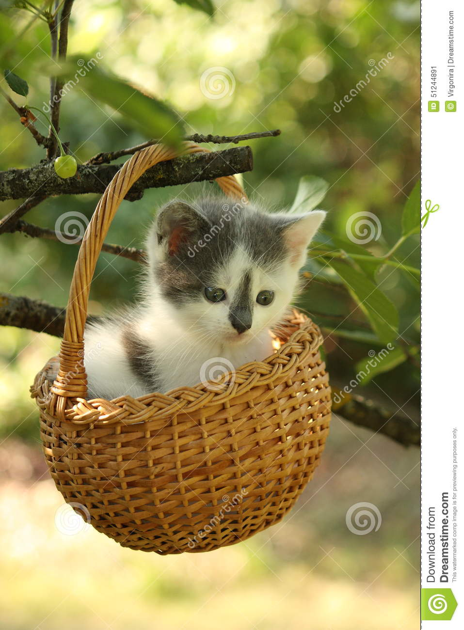 Cute Small White And Gray Kitten Resting In The Basket ...