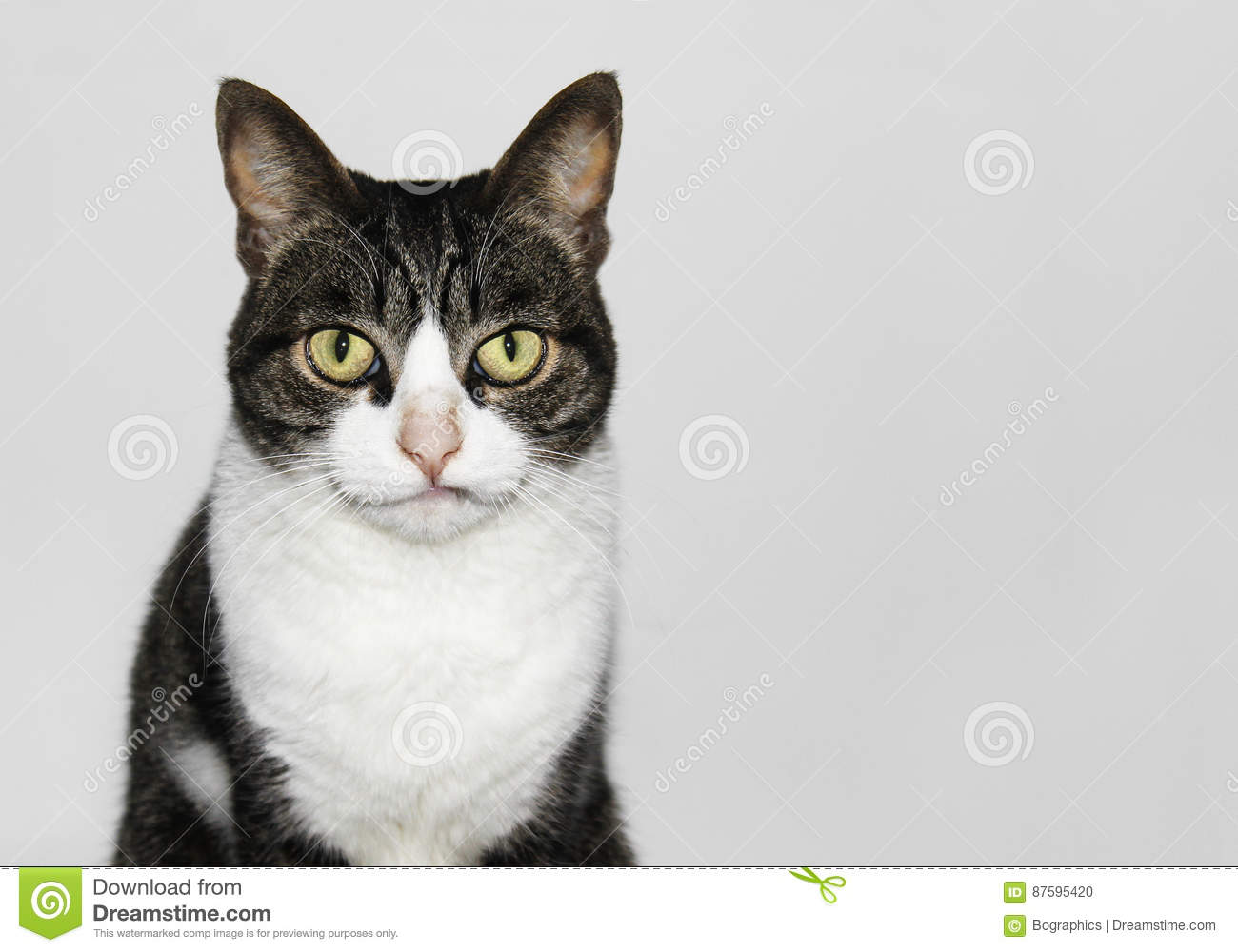 Cute but sober cat portrait isolated