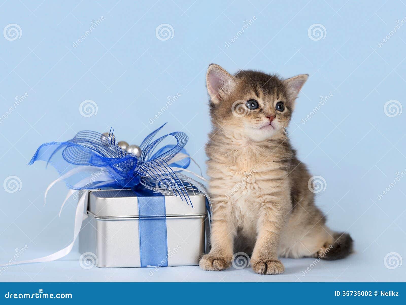 The Cat Return Free Download