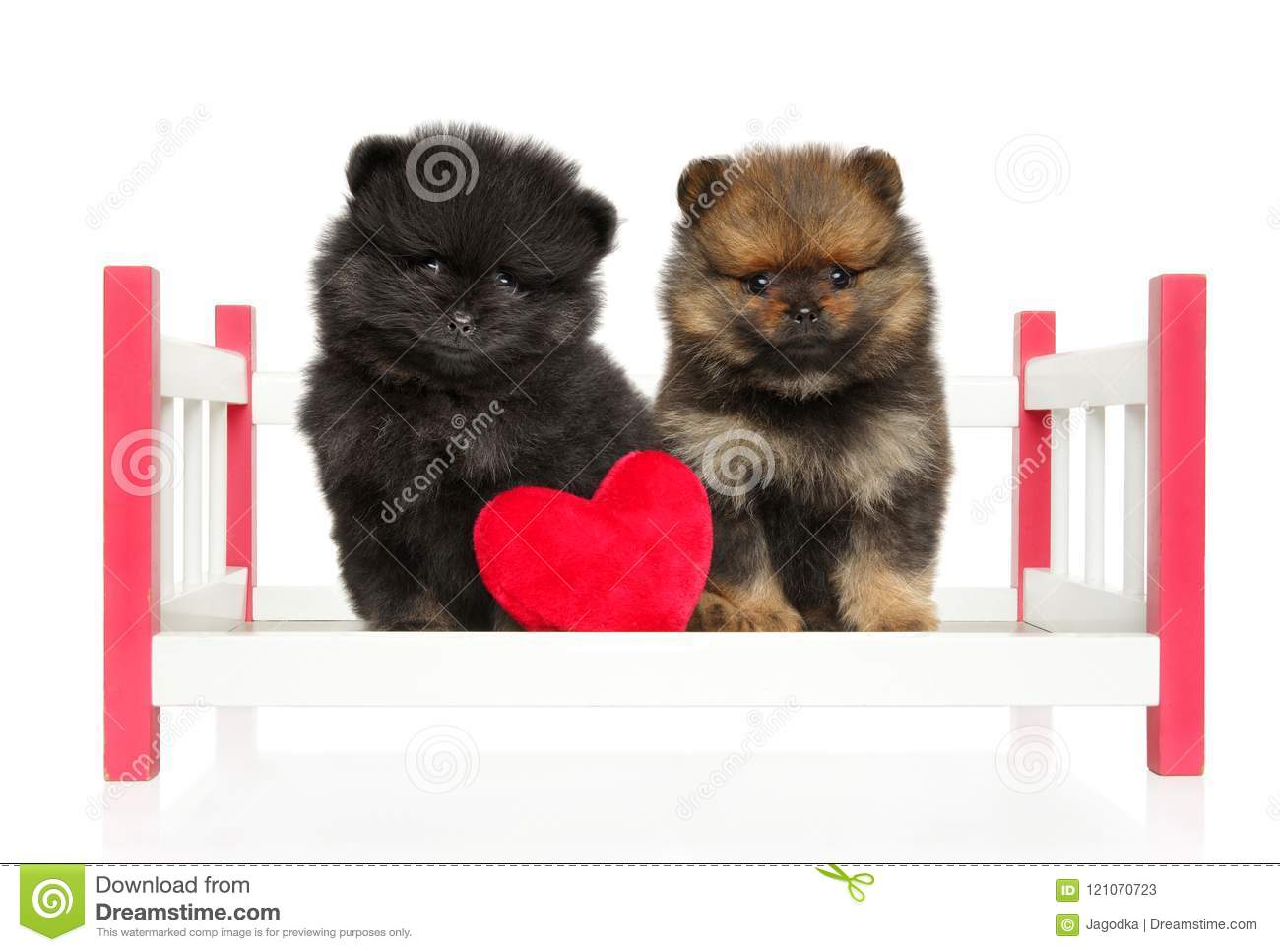 14 163 Baby Cute Puppies Photos Free Royalty Free Stock Photos From Dreamstime