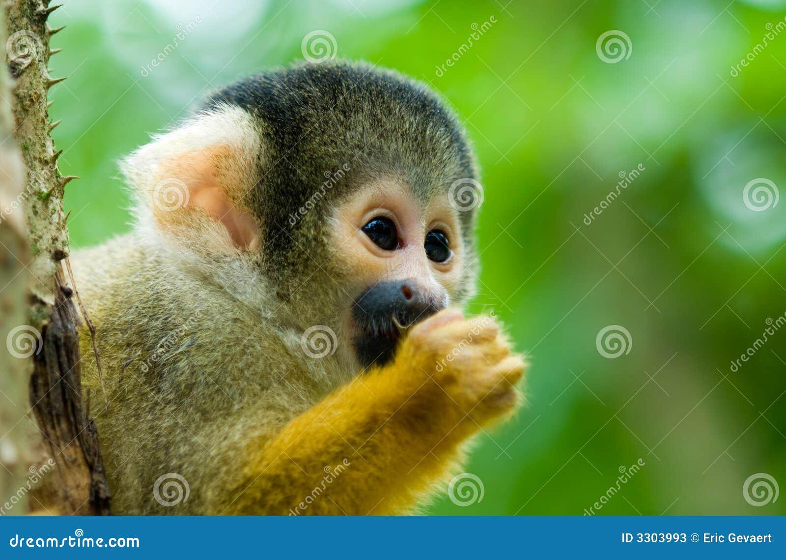 Фото половых органов обезьяны 27 фотография