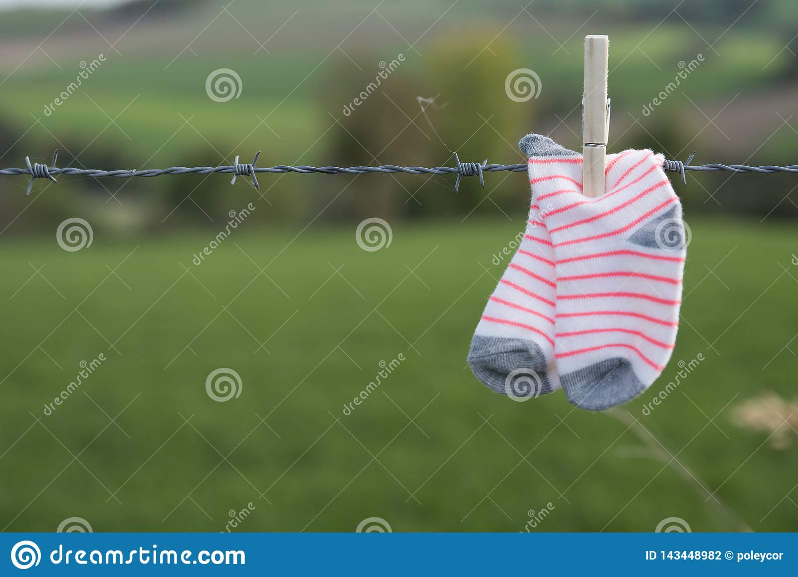 Baby socks drying with wooden clothespin on barbed wire, against green background