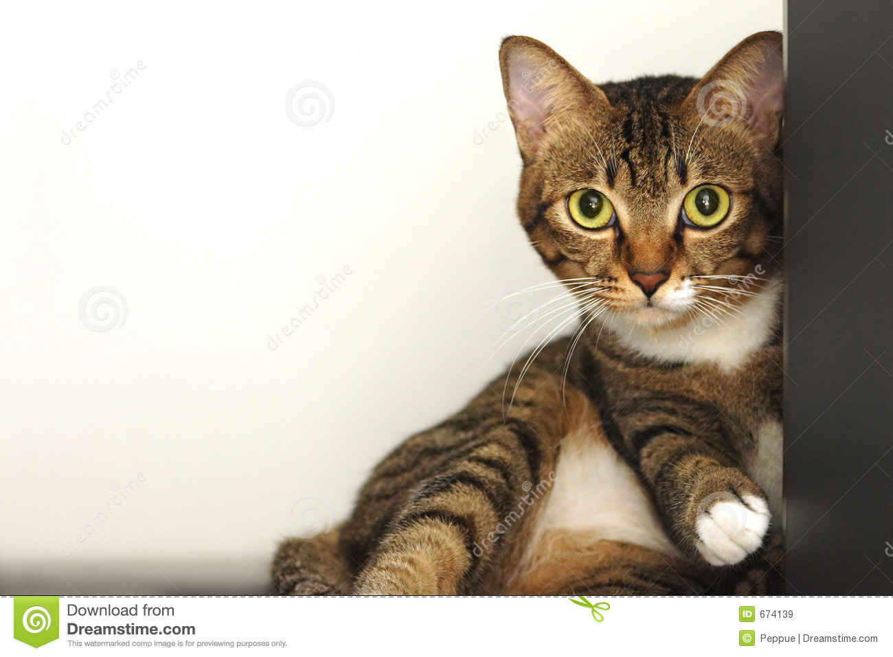 cute tabby cat royalty free stock images   image 674139