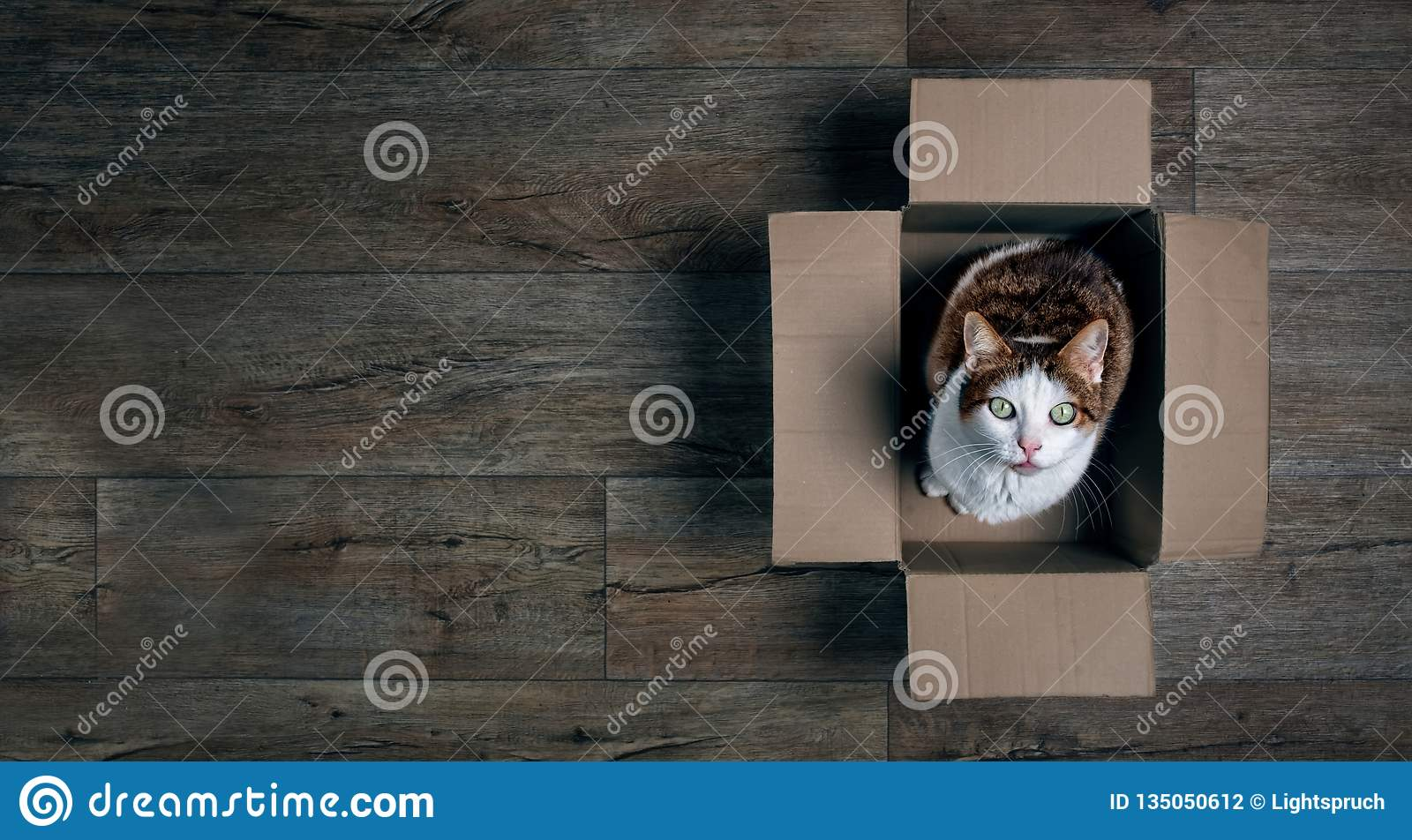 Cute tabby cat in a cardboard box looking up to the camera.