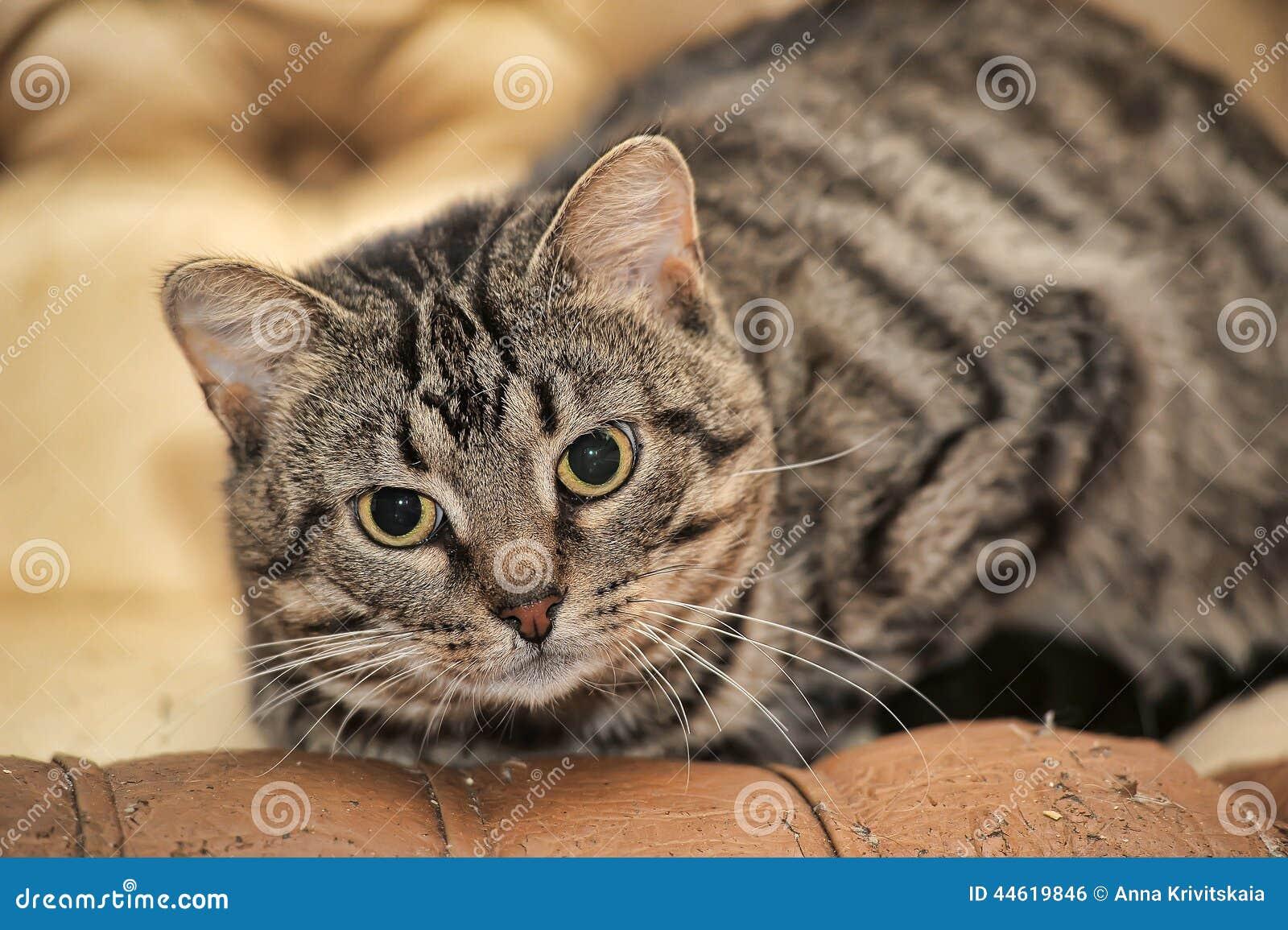Cute Tabby Cat Stock Photo - Image: 44619846