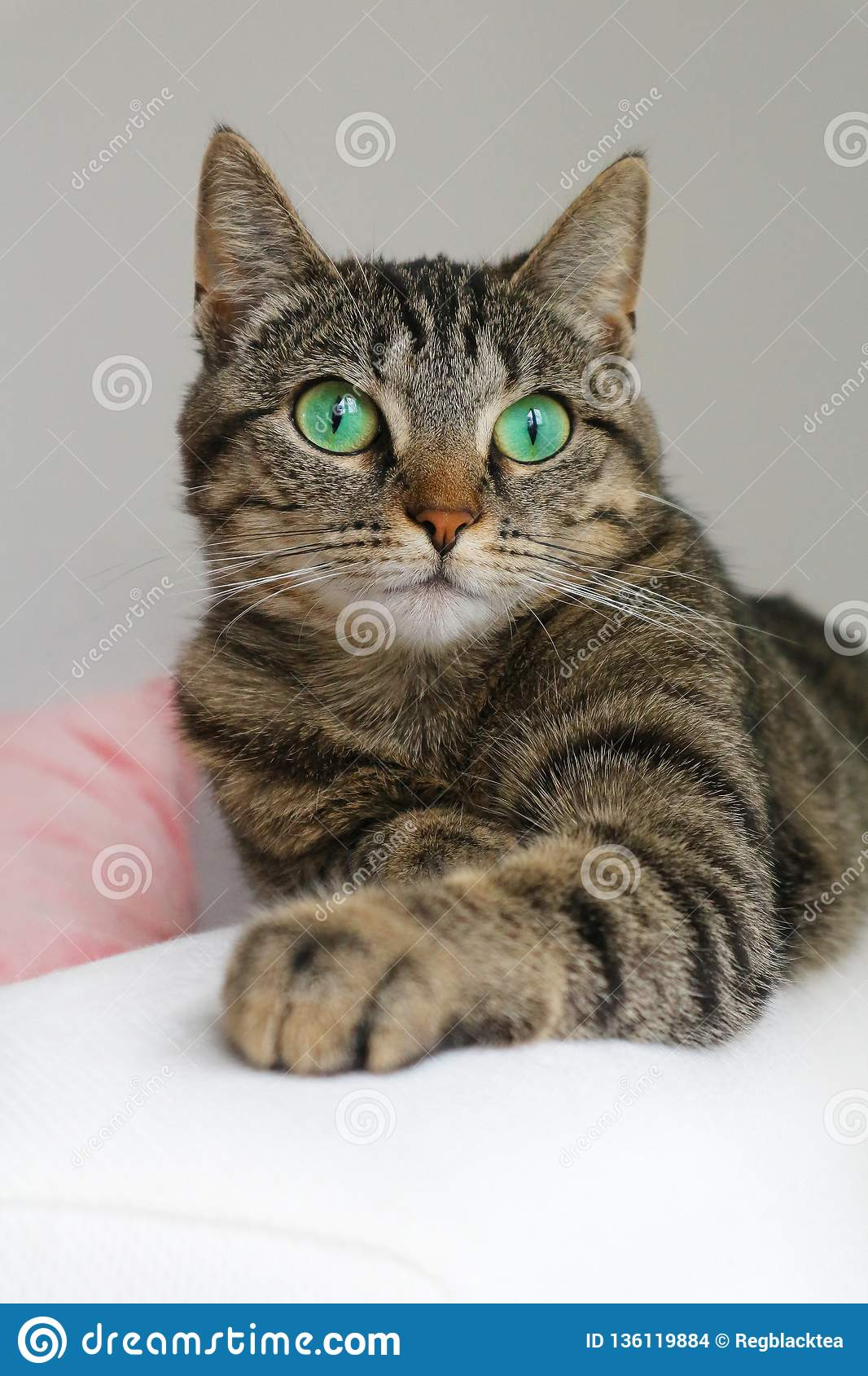 Cute tabby cat with green eyes lies on white couch.