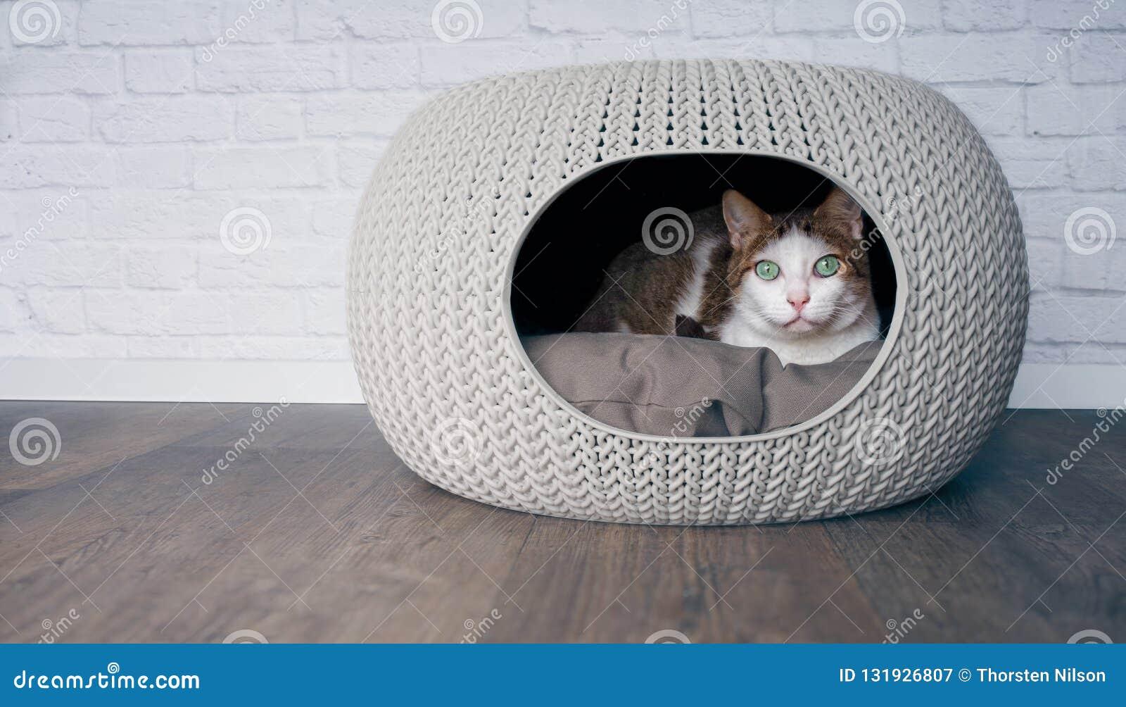 Cute tabby cat lying in a cat cave.