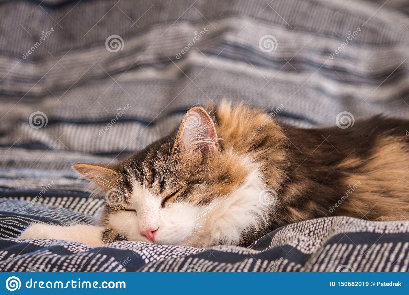 Cute tabby cat sleeping on bed with blurred background and copy space above
