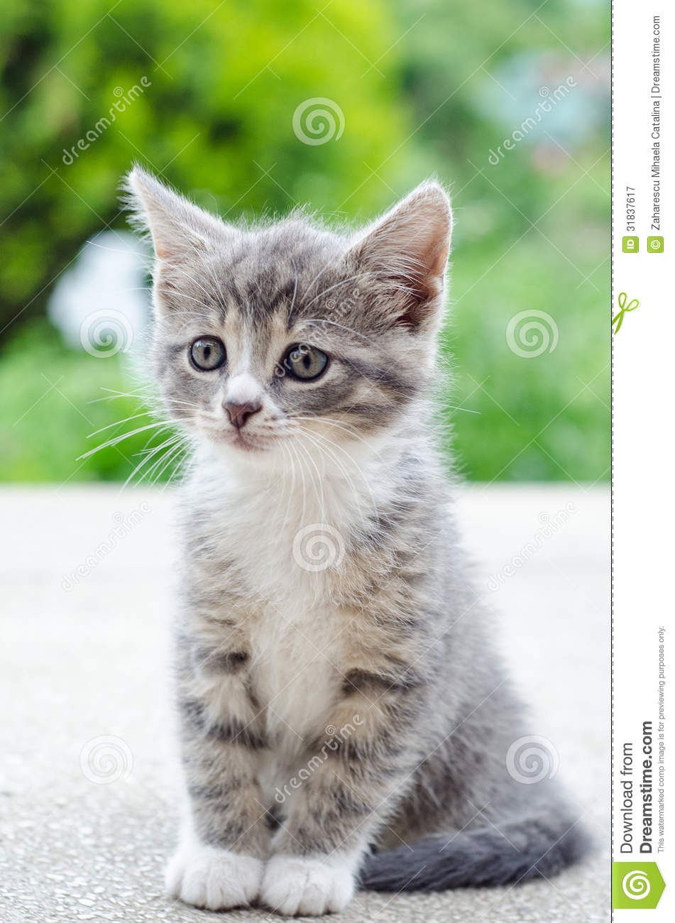 Cute Tabby Kitten Royalty Free Stock graphy Image