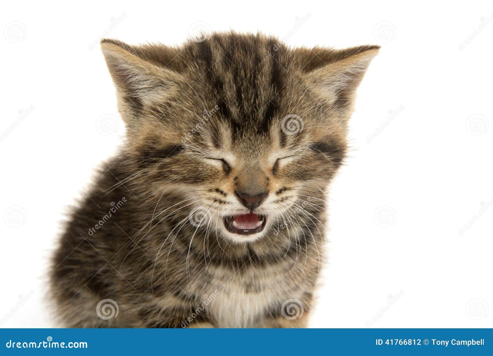 Cute Tabby Kitten Ion White Stock Image