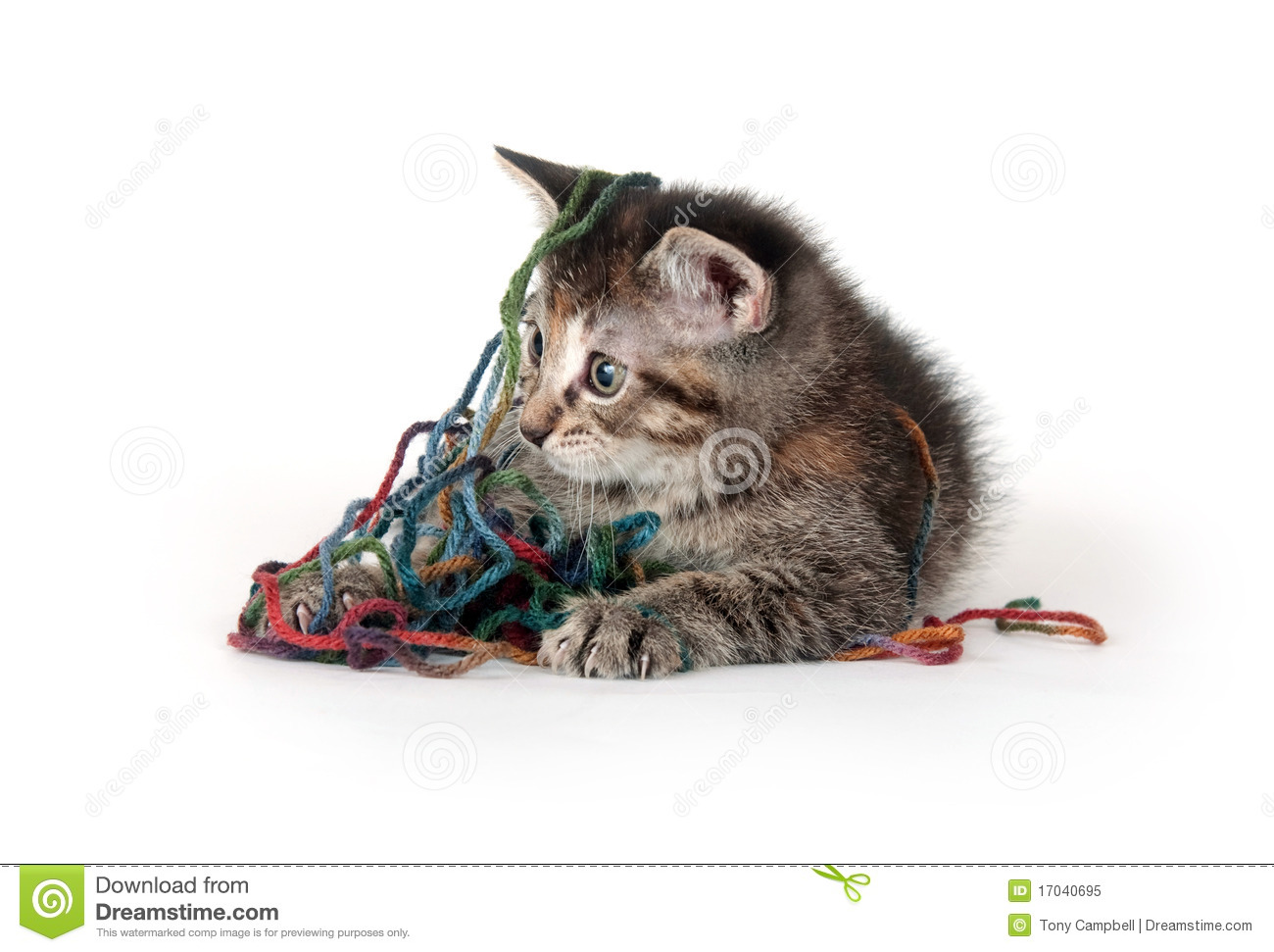 Cute Tabby Kitten Playing With Yarn Royalty Free Stock ...