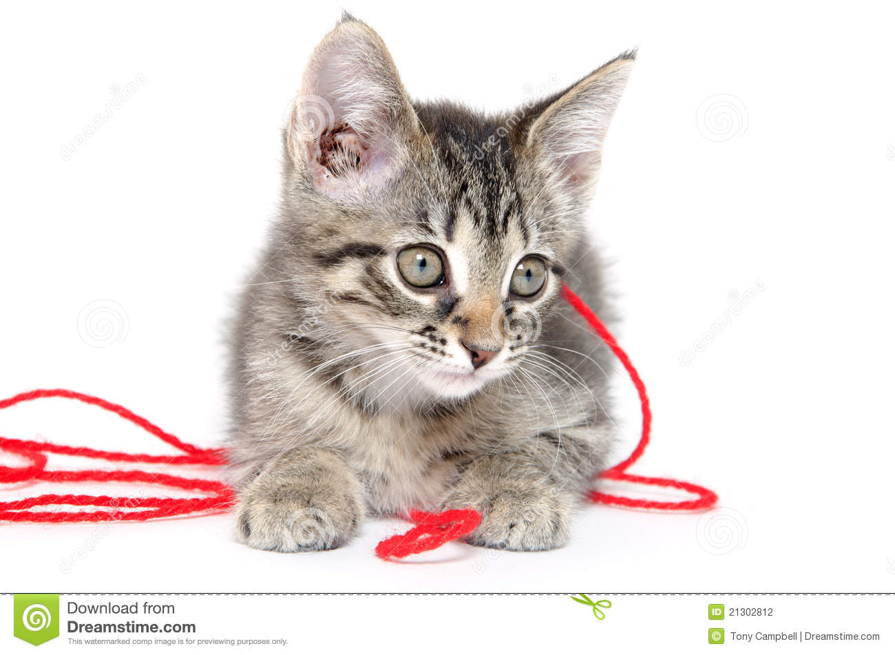 Cute Tabby Kitten Playing With Yarn Stock Photo - Image ...