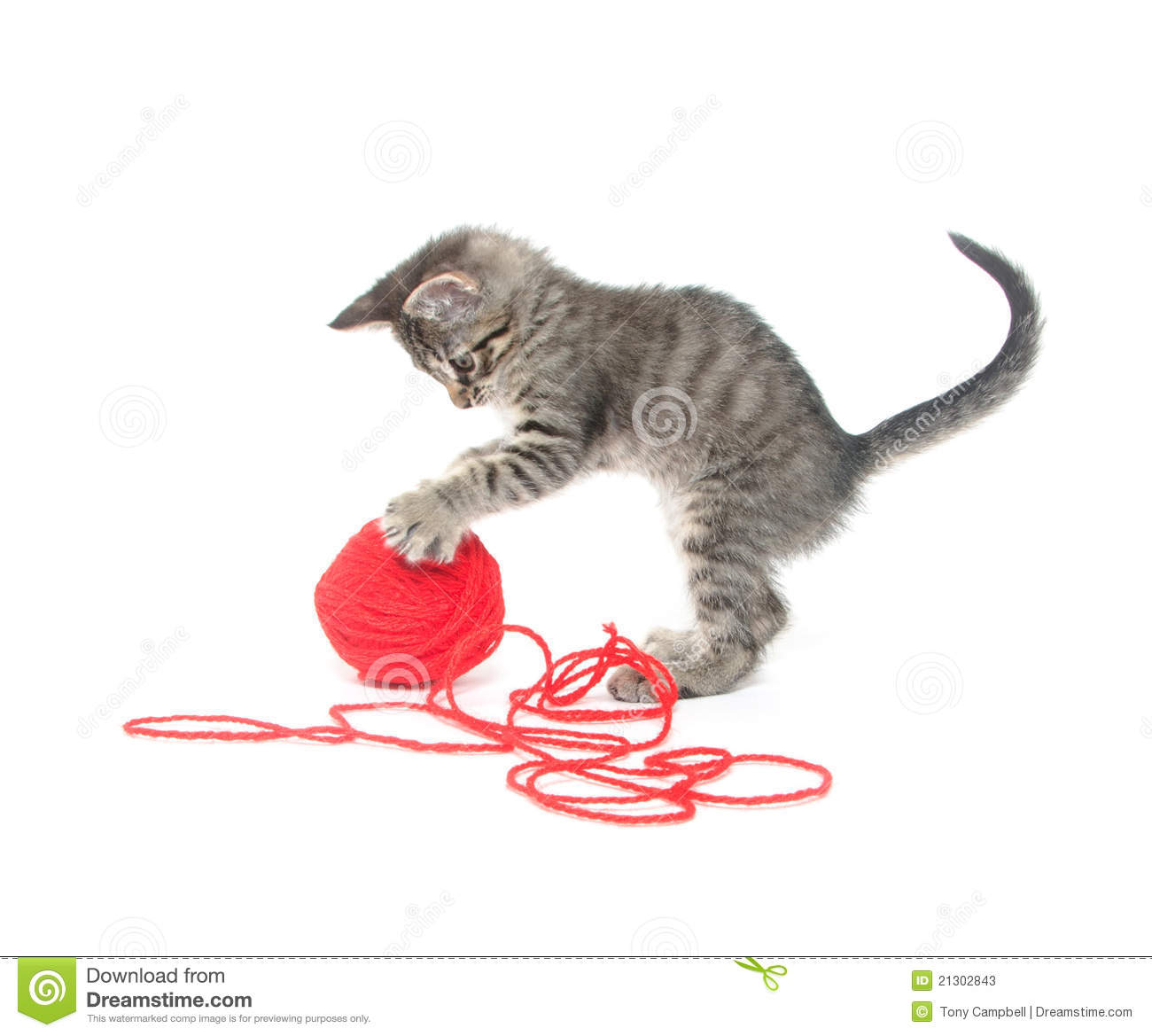 Cute Tabby Kitten Playing With Yarn Stock Photos - Image ...