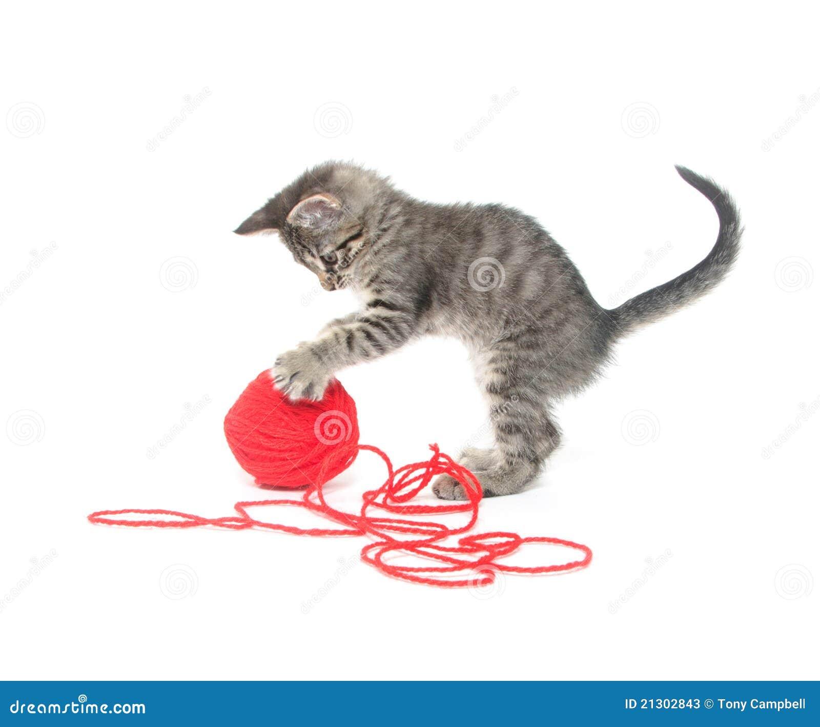 S Cat Picture Yarn
