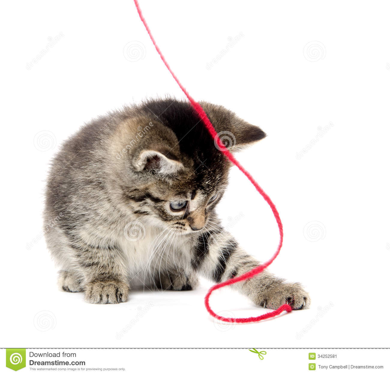 Cute Baby Kittens Playing With Yarn | Black Models Picture