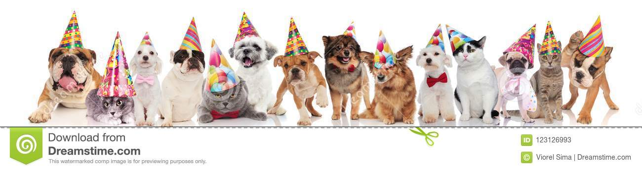 Cute Team Of Cats And Dogs With Colorful Hats Ready For Birthday Party While Standing Sitting Lying On White Background
