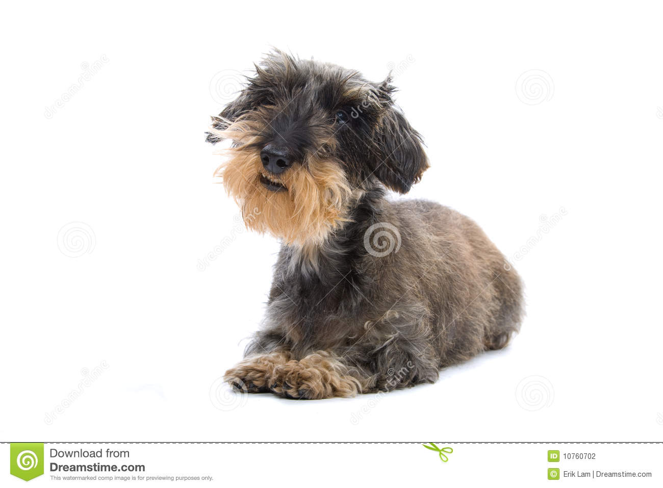 Cute small fluffy dog breeds for Fluffy little dog breeds