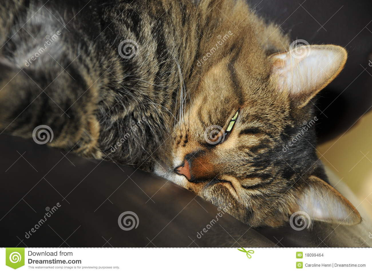 Cute Tired Cat Stock Images - Image: 18099464