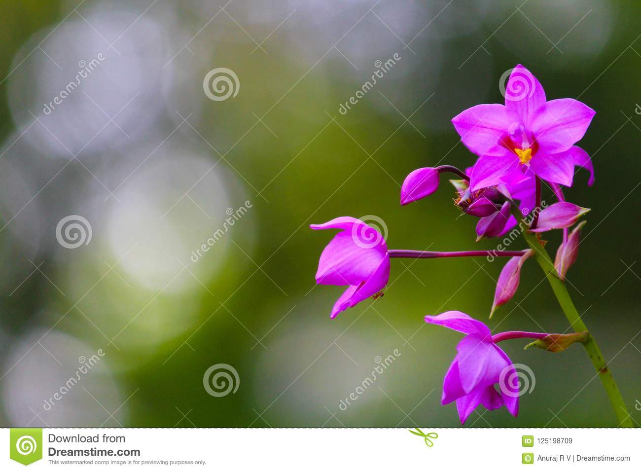 Cute Violet Orchid Flowers On Blurred Background Stock Image Image