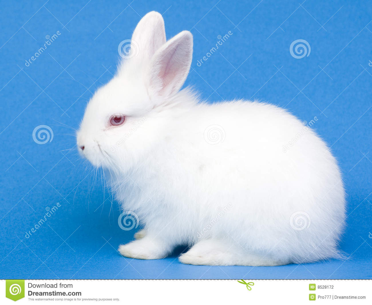 Cute White Bunny Pictures | www.pixshark.com - Images ...