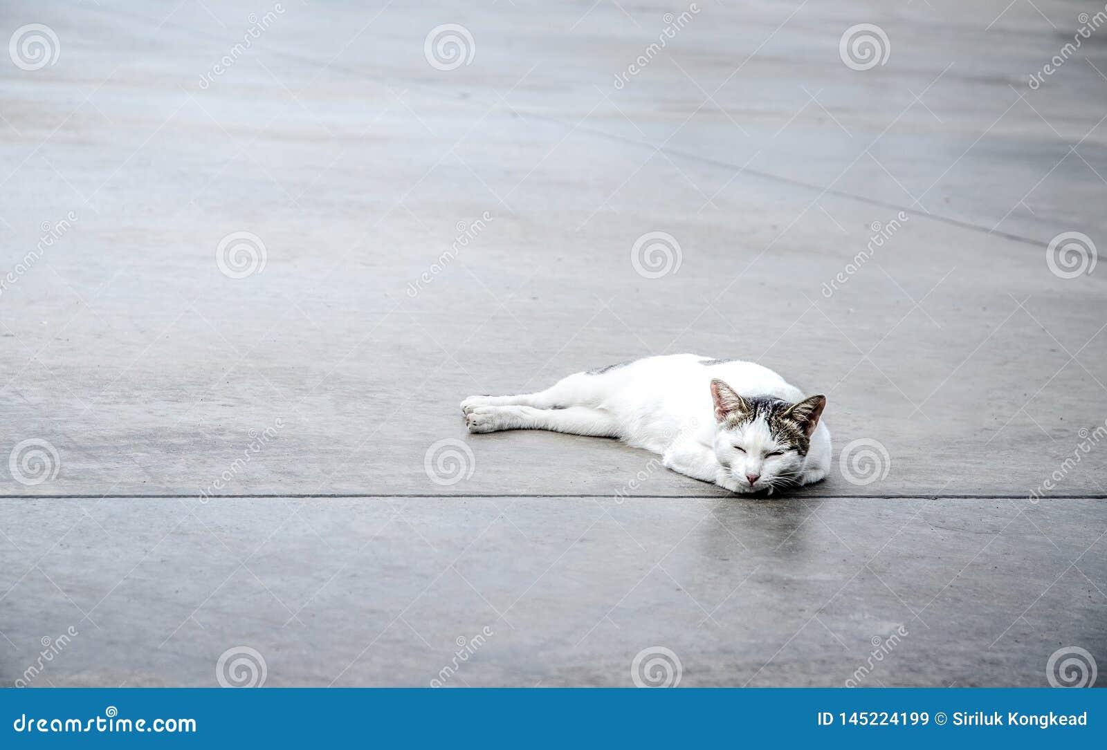 Cute white cat on the floor