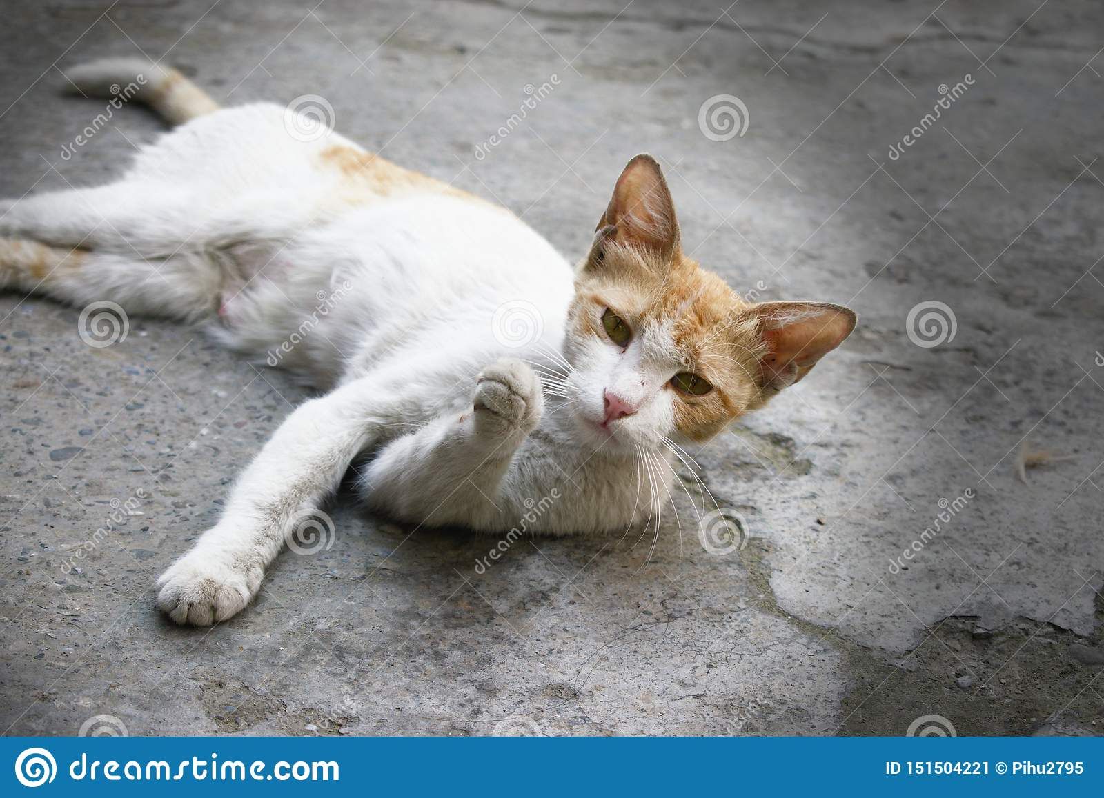 Cute white cat with an interesting and curious expression ans