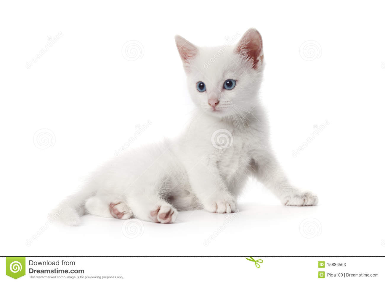 White And Grey Cat With Green Eyes