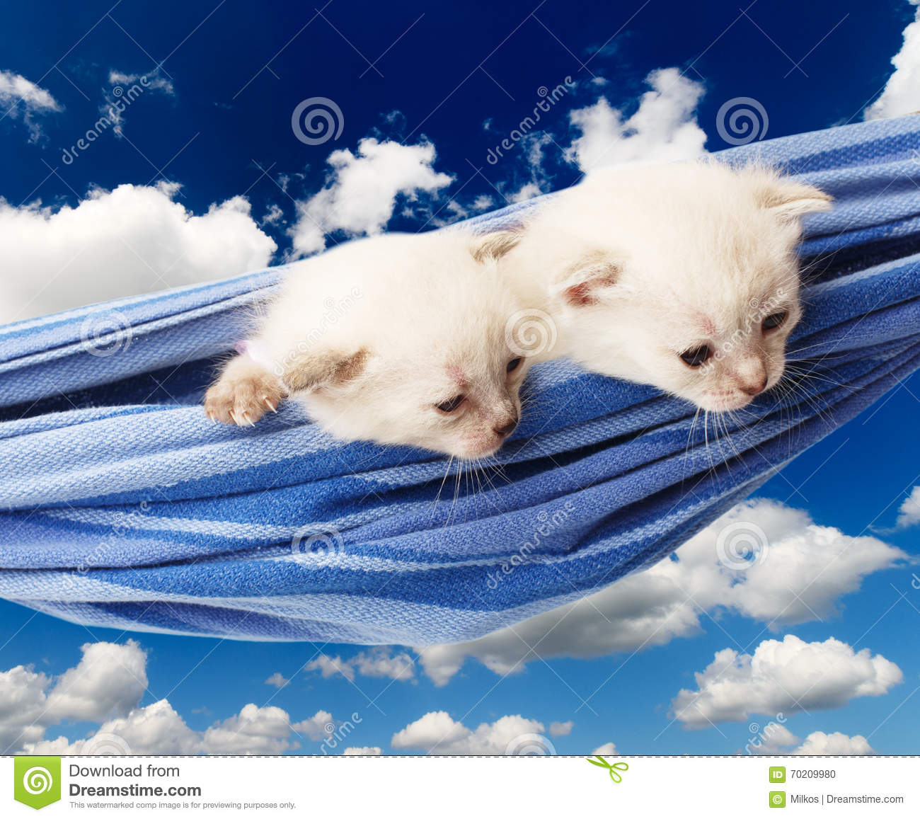 Cute white kittens in hammock isolated at blue sky