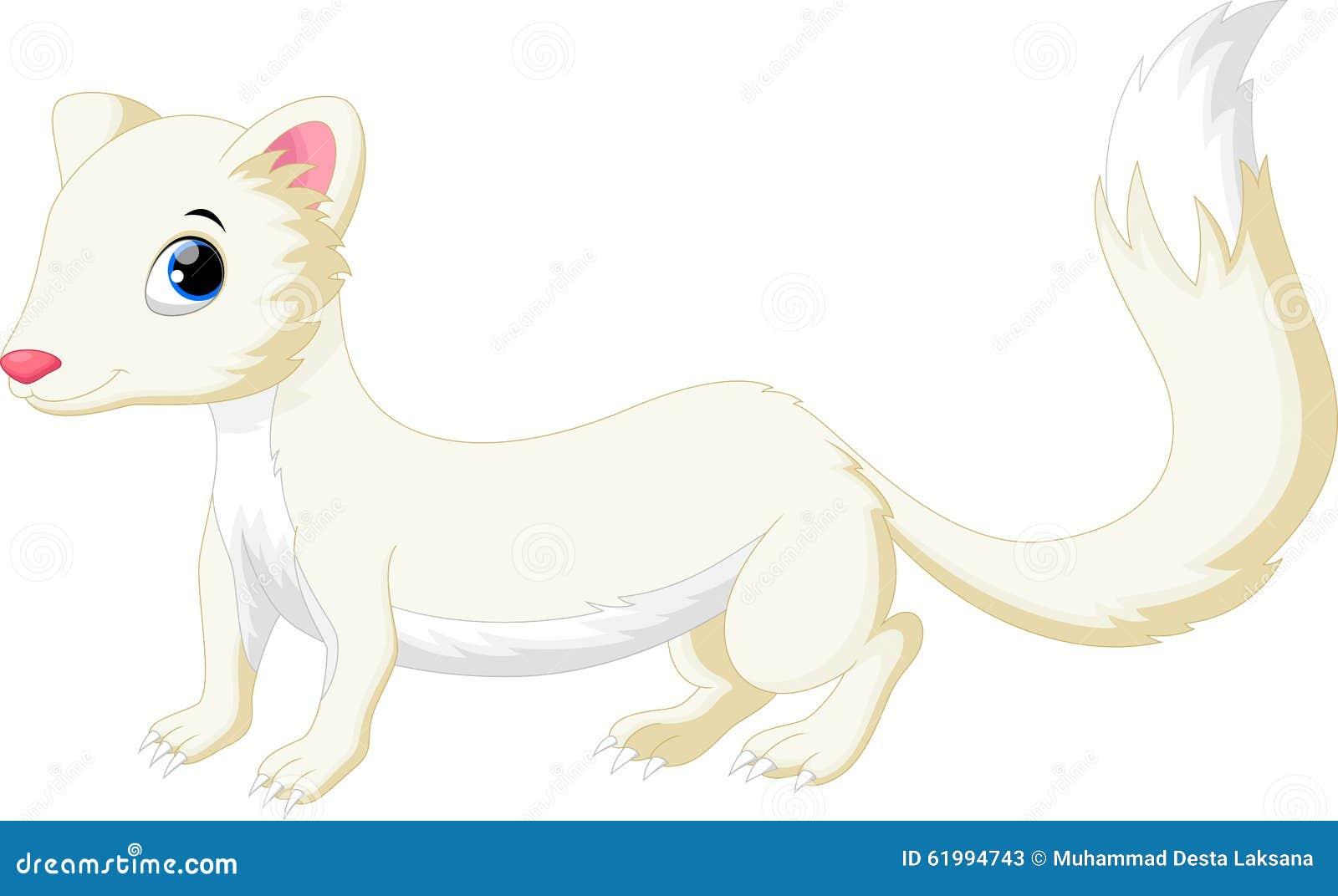 White Least Weasel