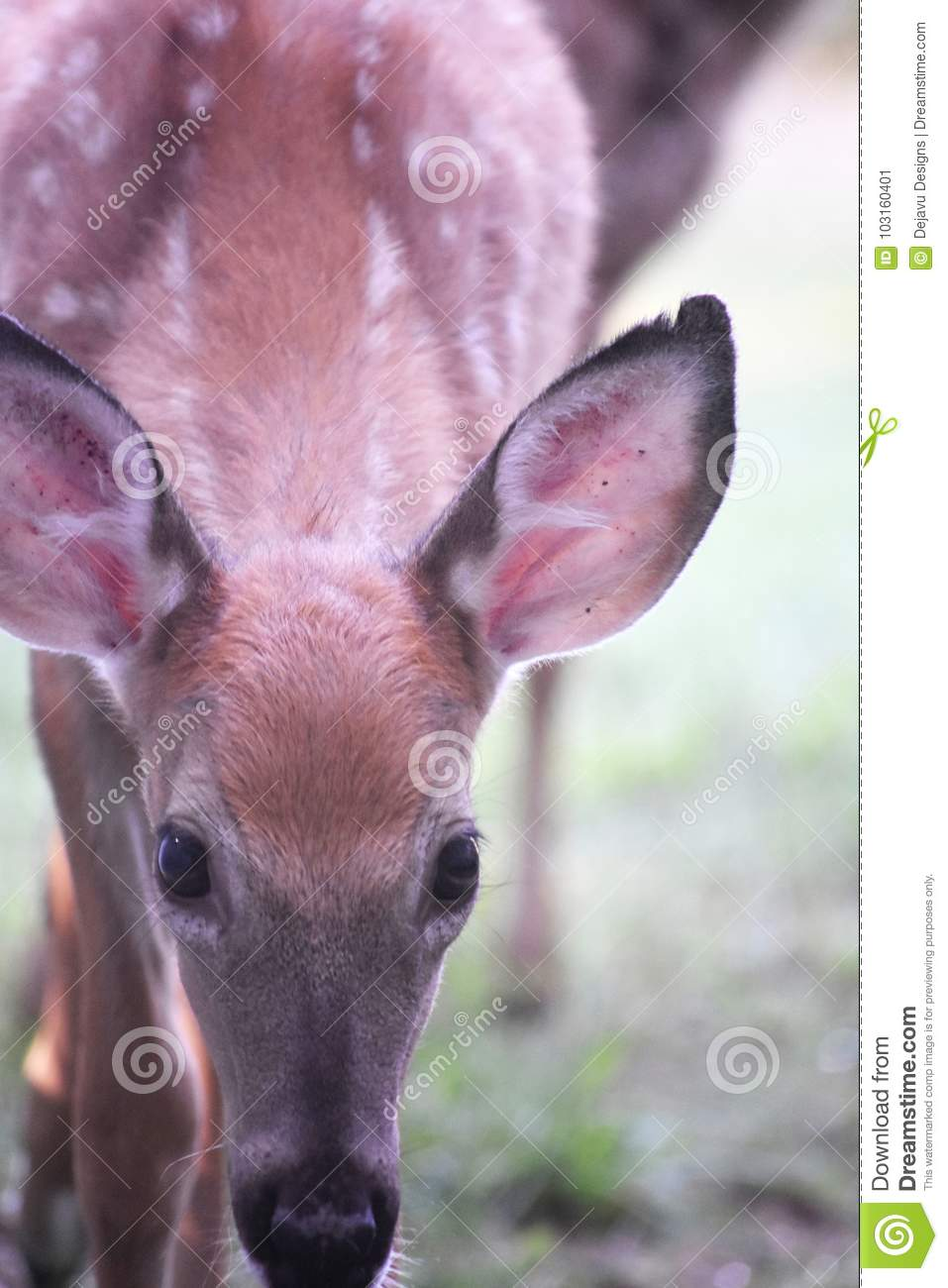 Cute white tailed deer with its head bowed