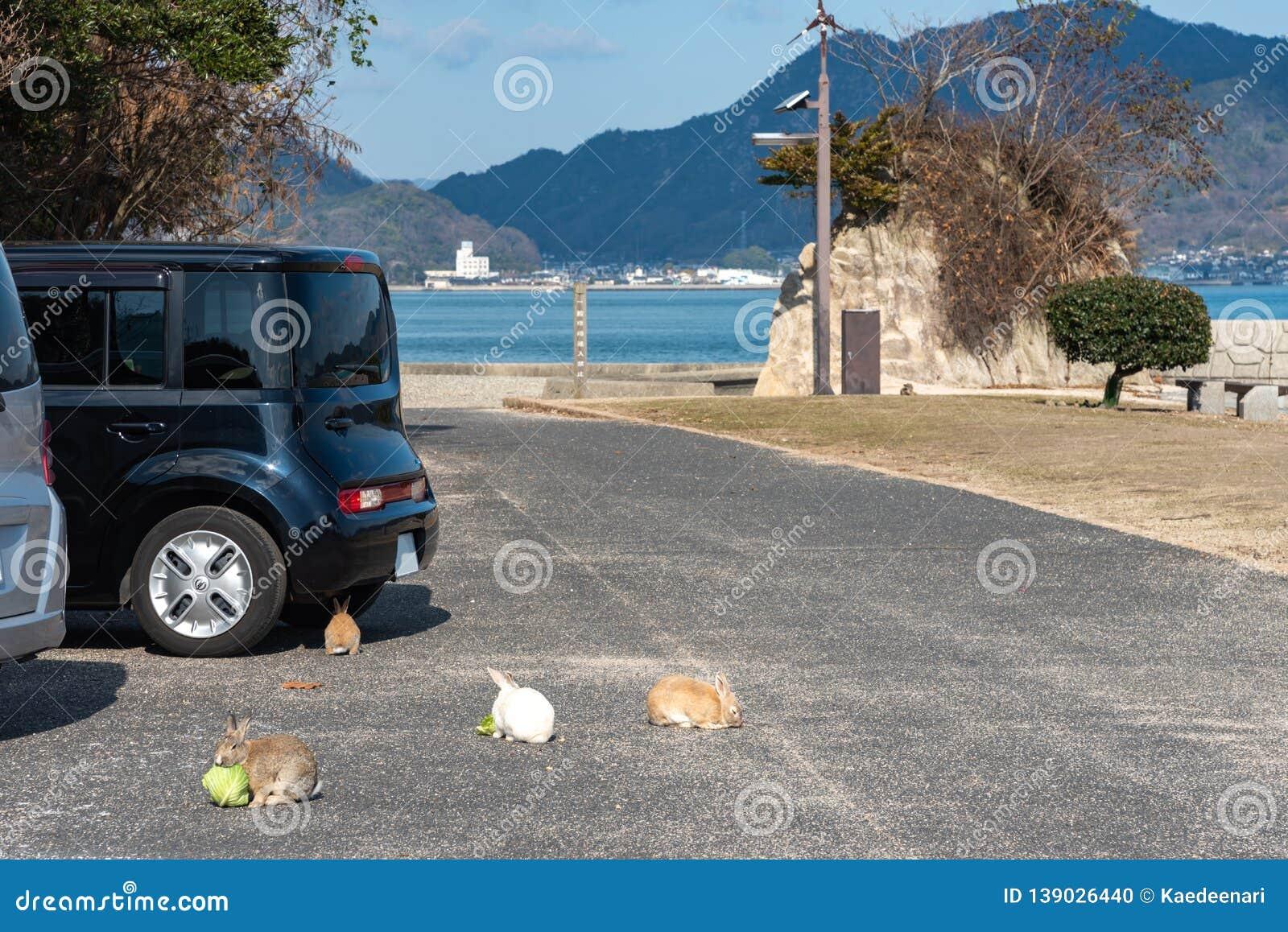 Cute wild rabbits on Okunoshima Island in sunny weaher