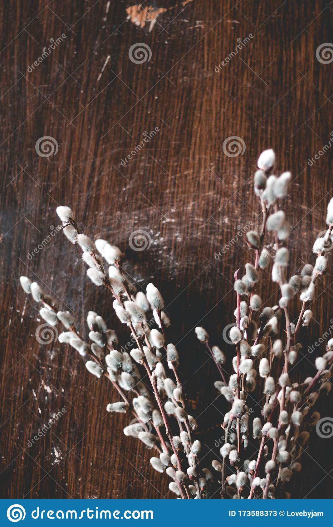 Cute Willow Branches On Wooden Table Flat Lay View Hello Spring Concept Tree Branch Close Up Stock Image Image Of Decorative Nature 173588373