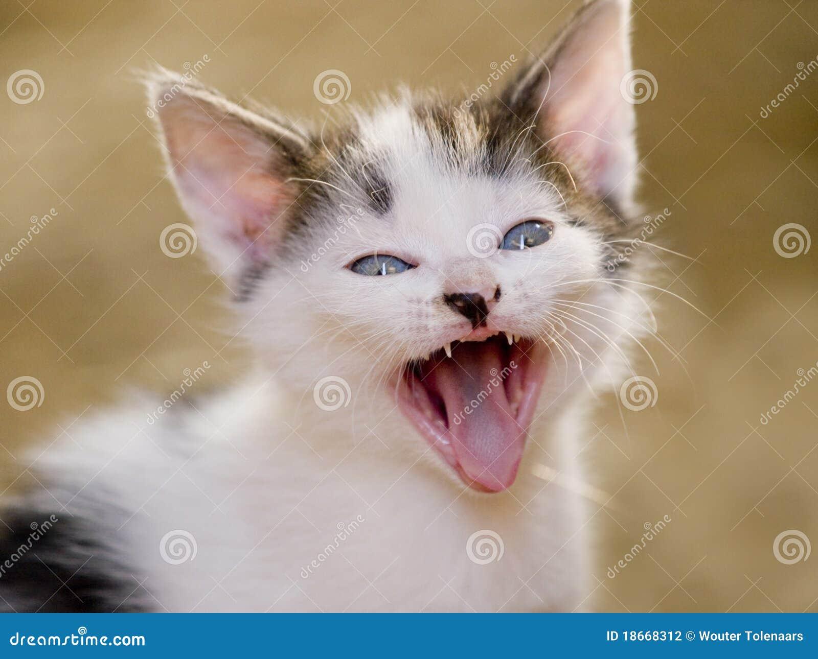 Cute Yawning Kitten Stock Photography - Image: 18668312