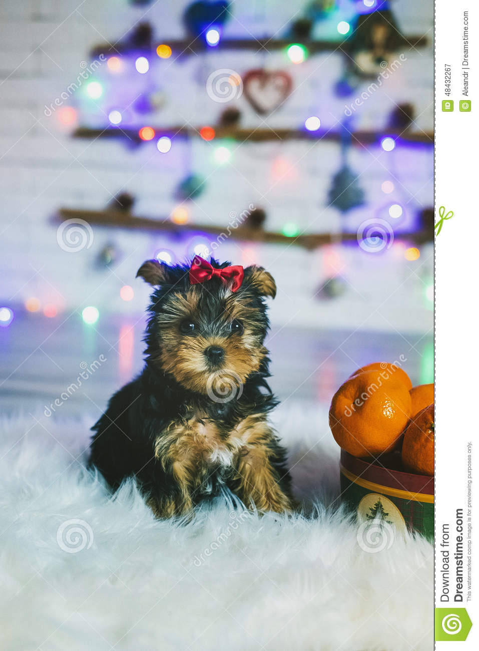 Cute Yorkshire Terrier Puppy Stock Image Image Of Adorable Lapdog