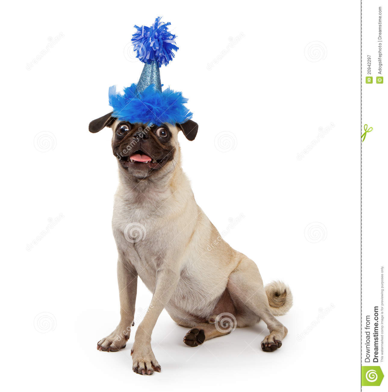 Dogs With Party Hats