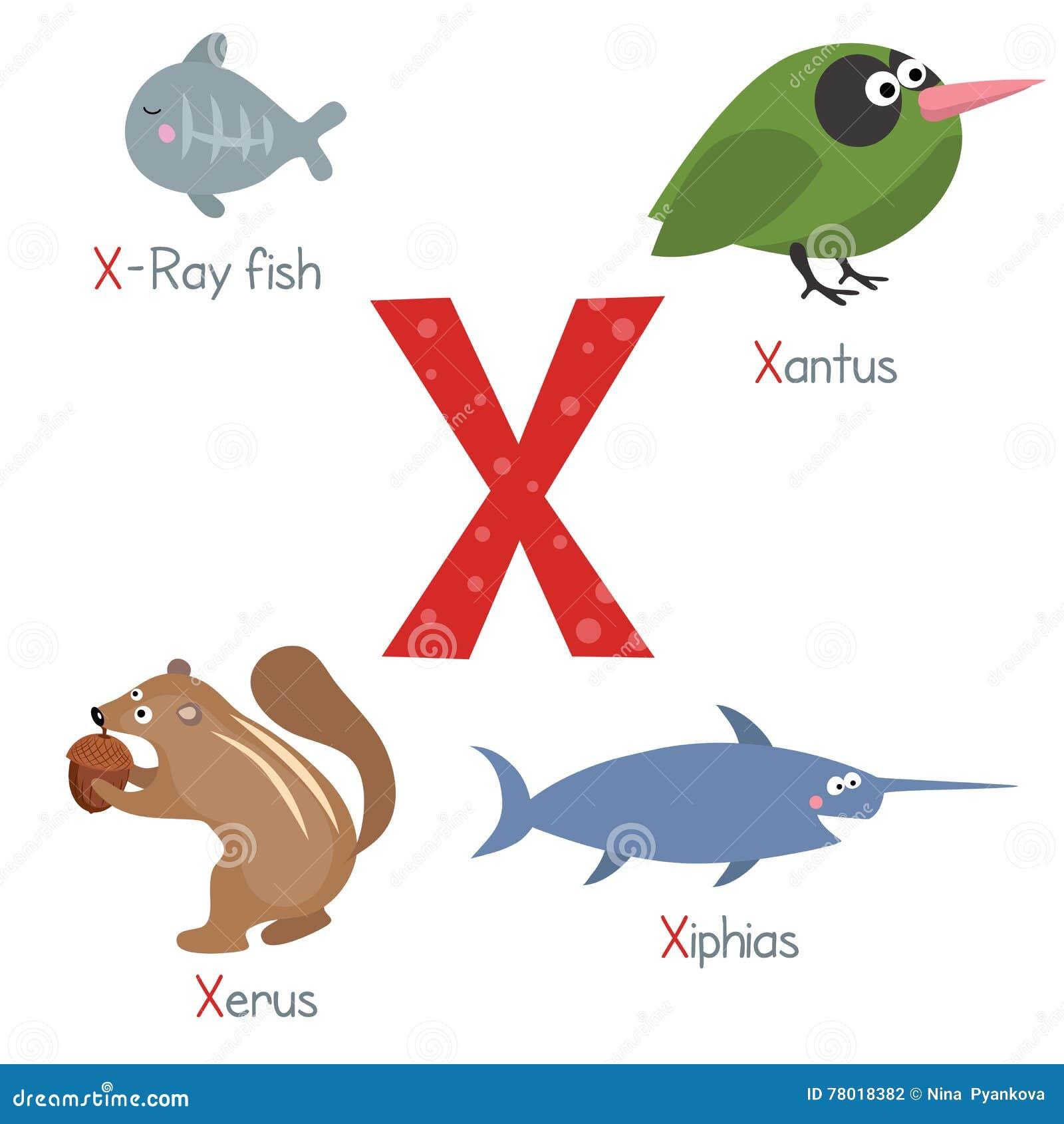 Letter X With Cartoon Xerus Vector Illustration ...