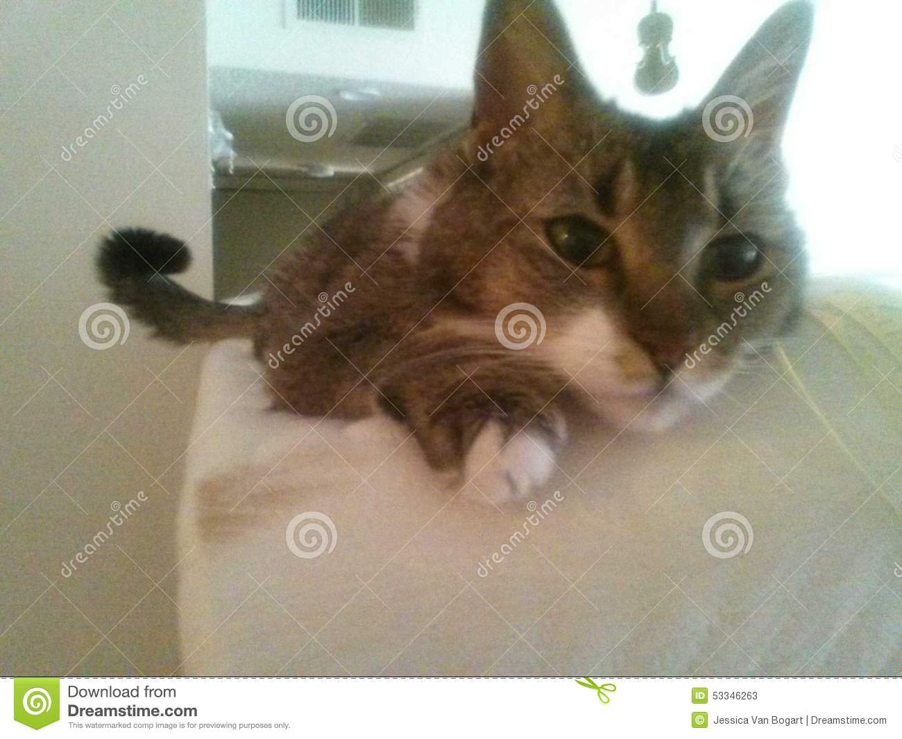 Cutest kitty stock image Image of cutest ever close