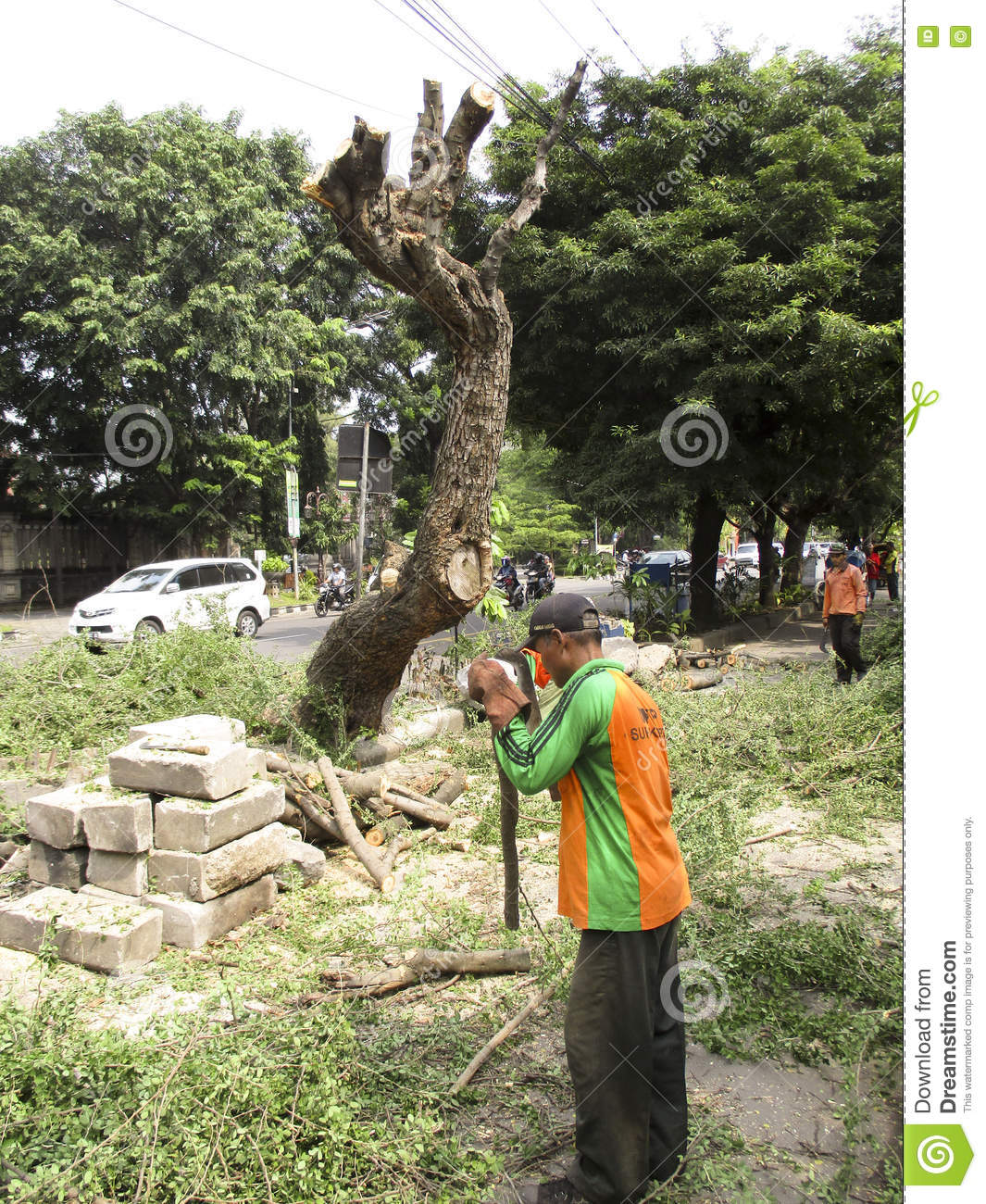Tractor Man On Cutting Trees : Man cutting trees using blue sharp saw and professional