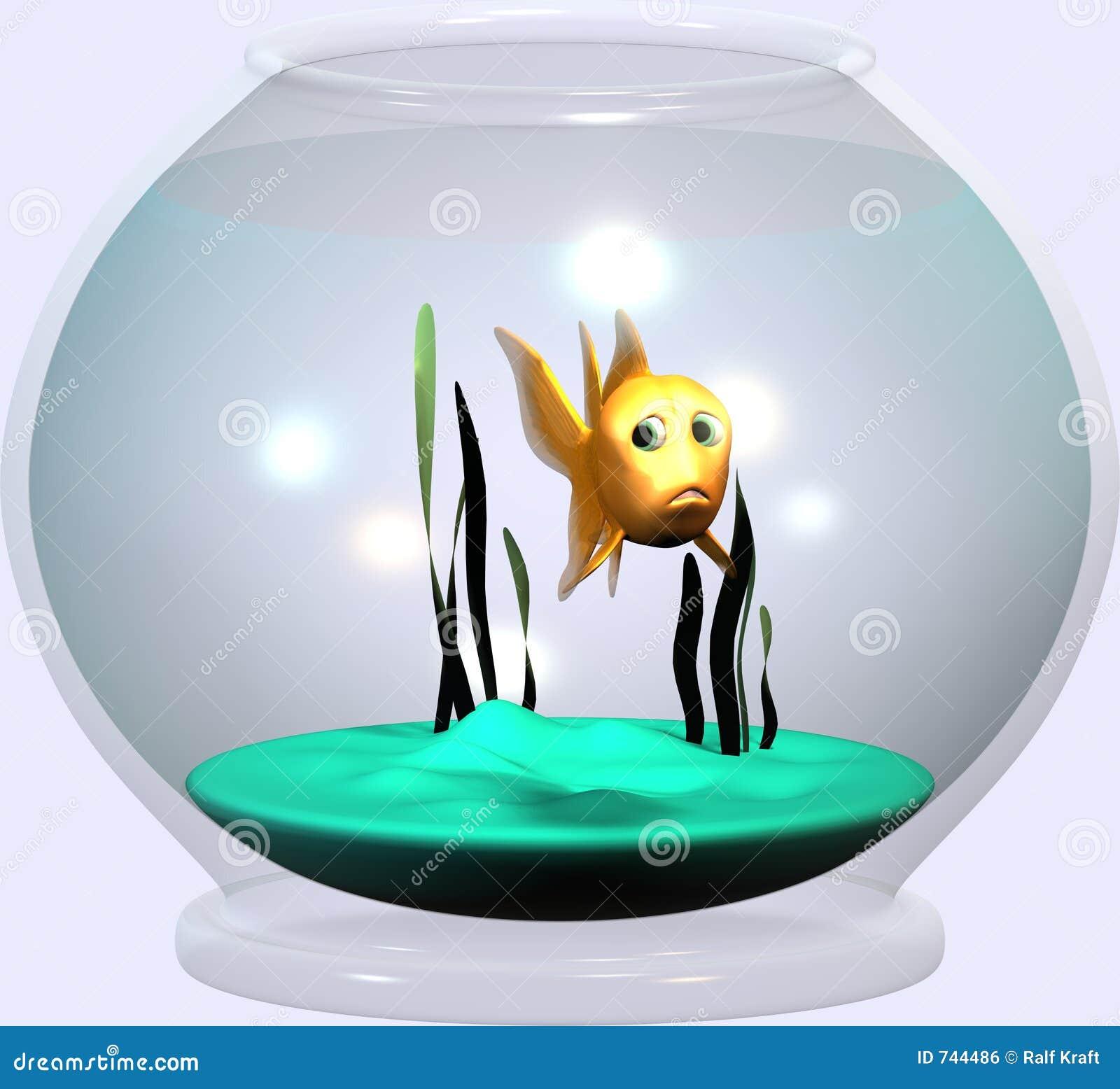 Cuvette de Goldfish