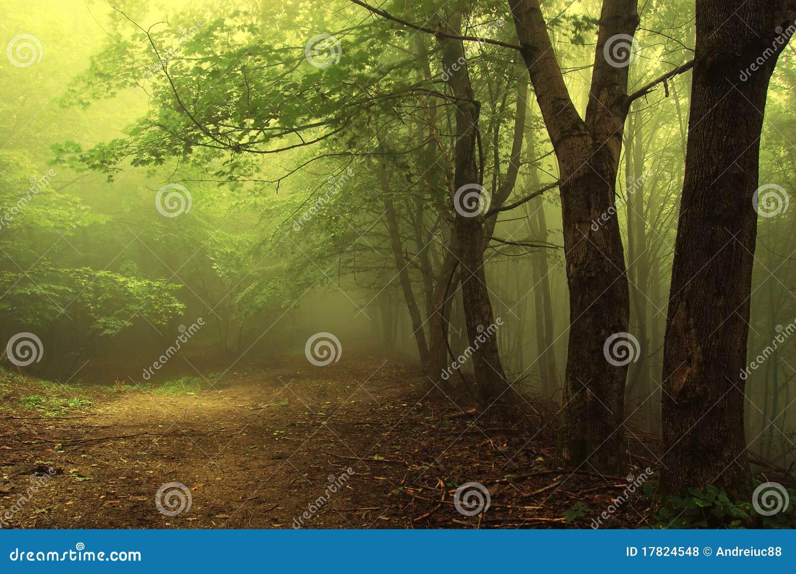 Cuvette de route une forêt brumeuse verte