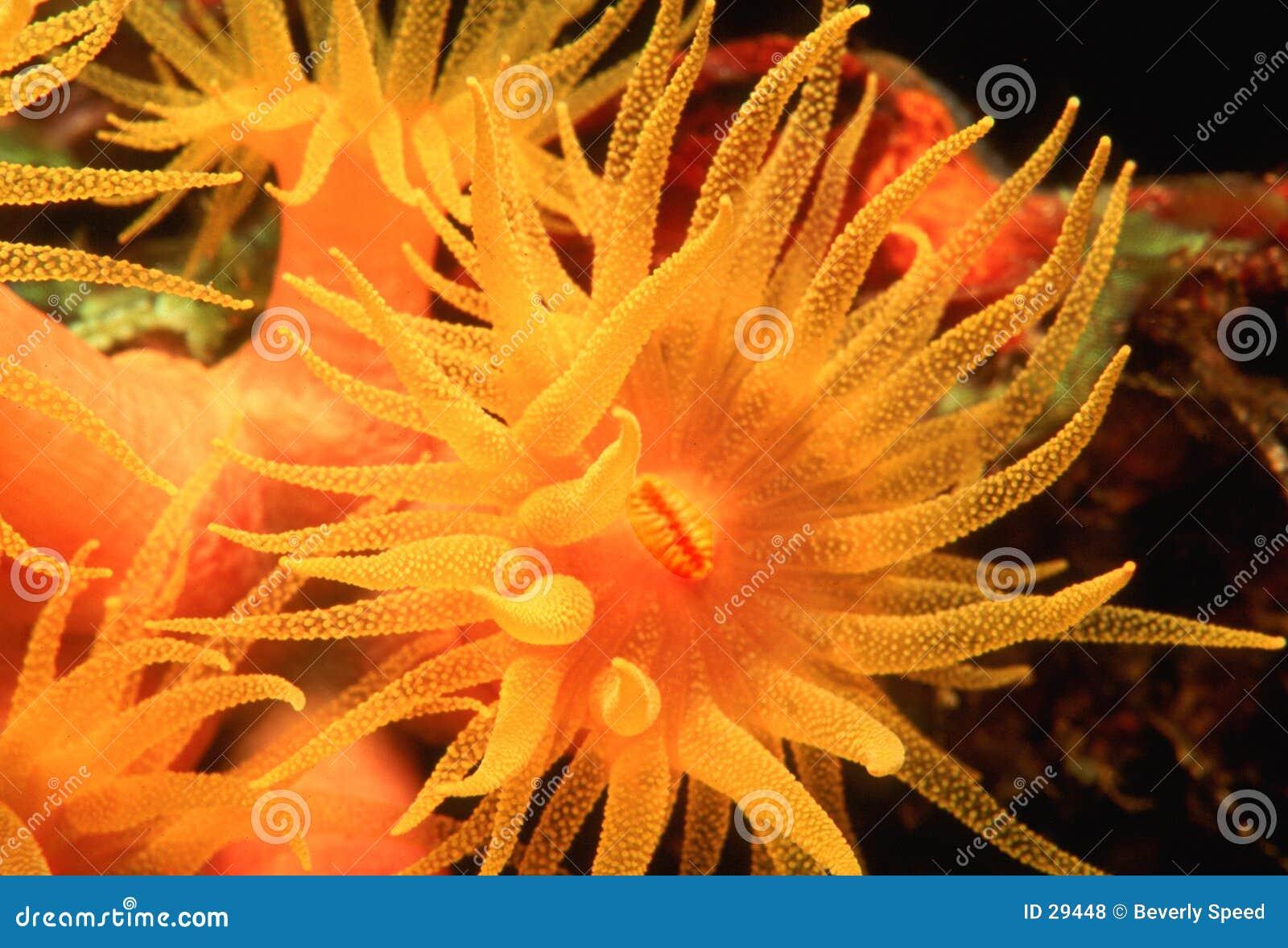 Cuvette orange II