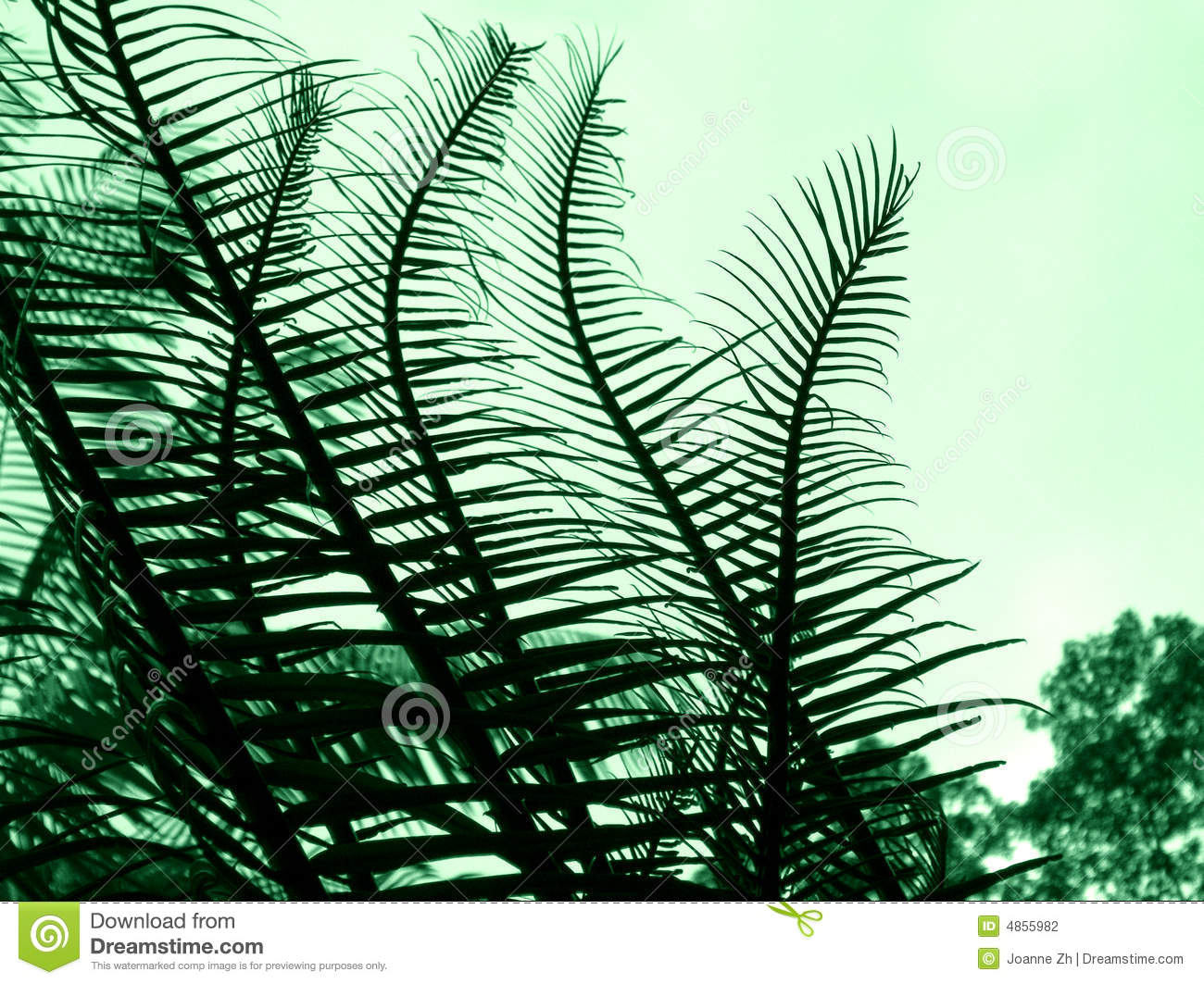 Download Cycad - Plant abstract stock photo. Image of branches - 4855982