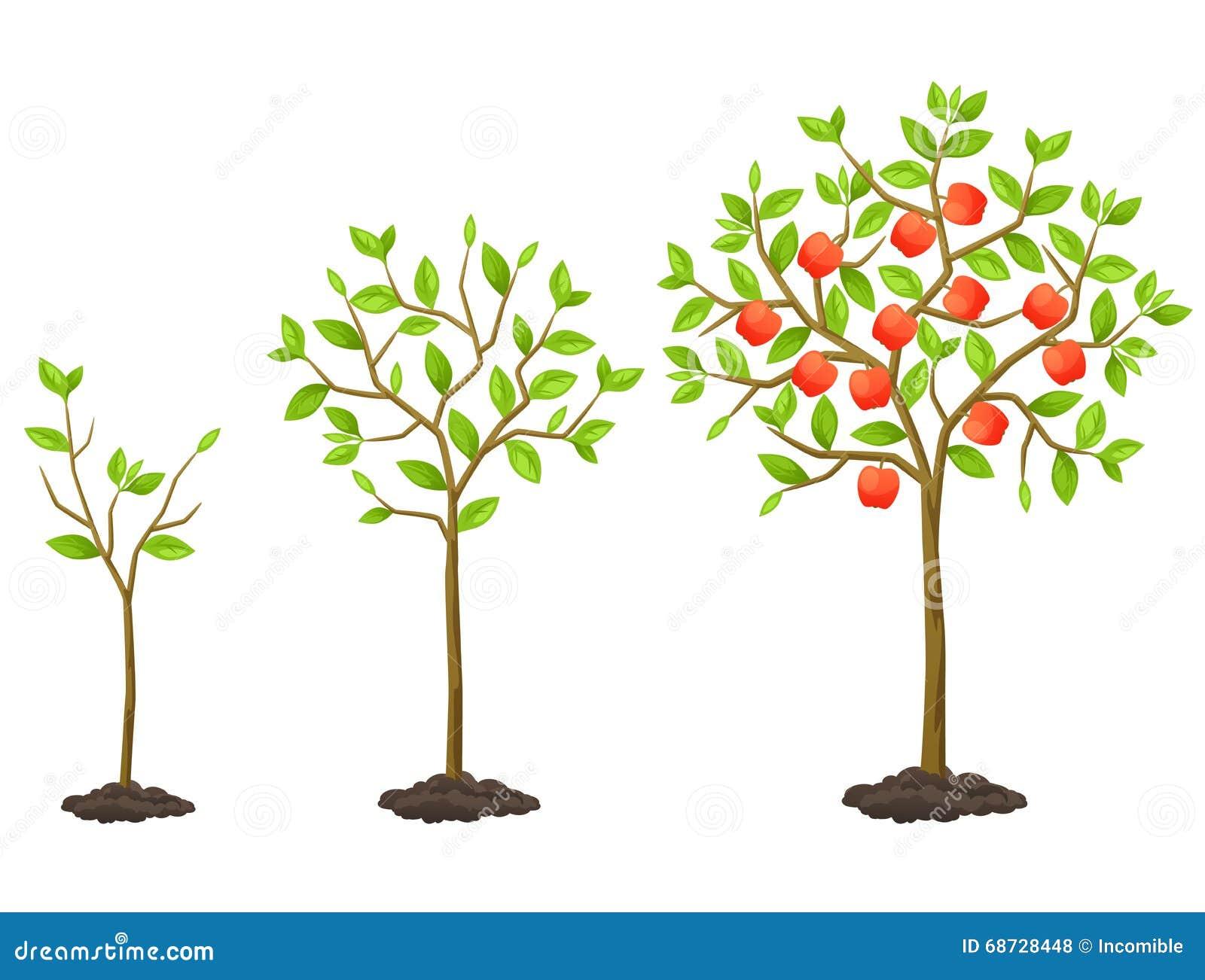 cycle de croissance de jeune plante l 39 arbre fruitier illustration pour les livrets agricoles. Black Bedroom Furniture Sets. Home Design Ideas