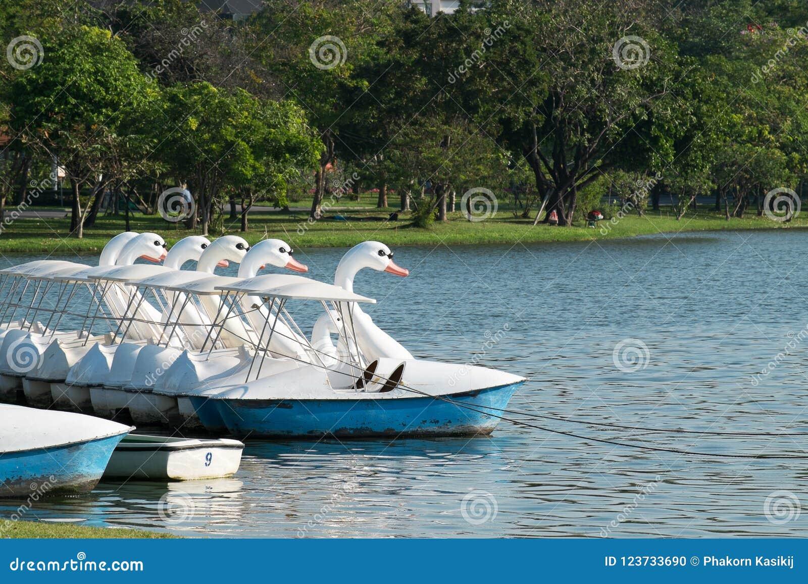 Cycle de flottement de bateau de cygne, amusement et service extérieur de détente d exercice